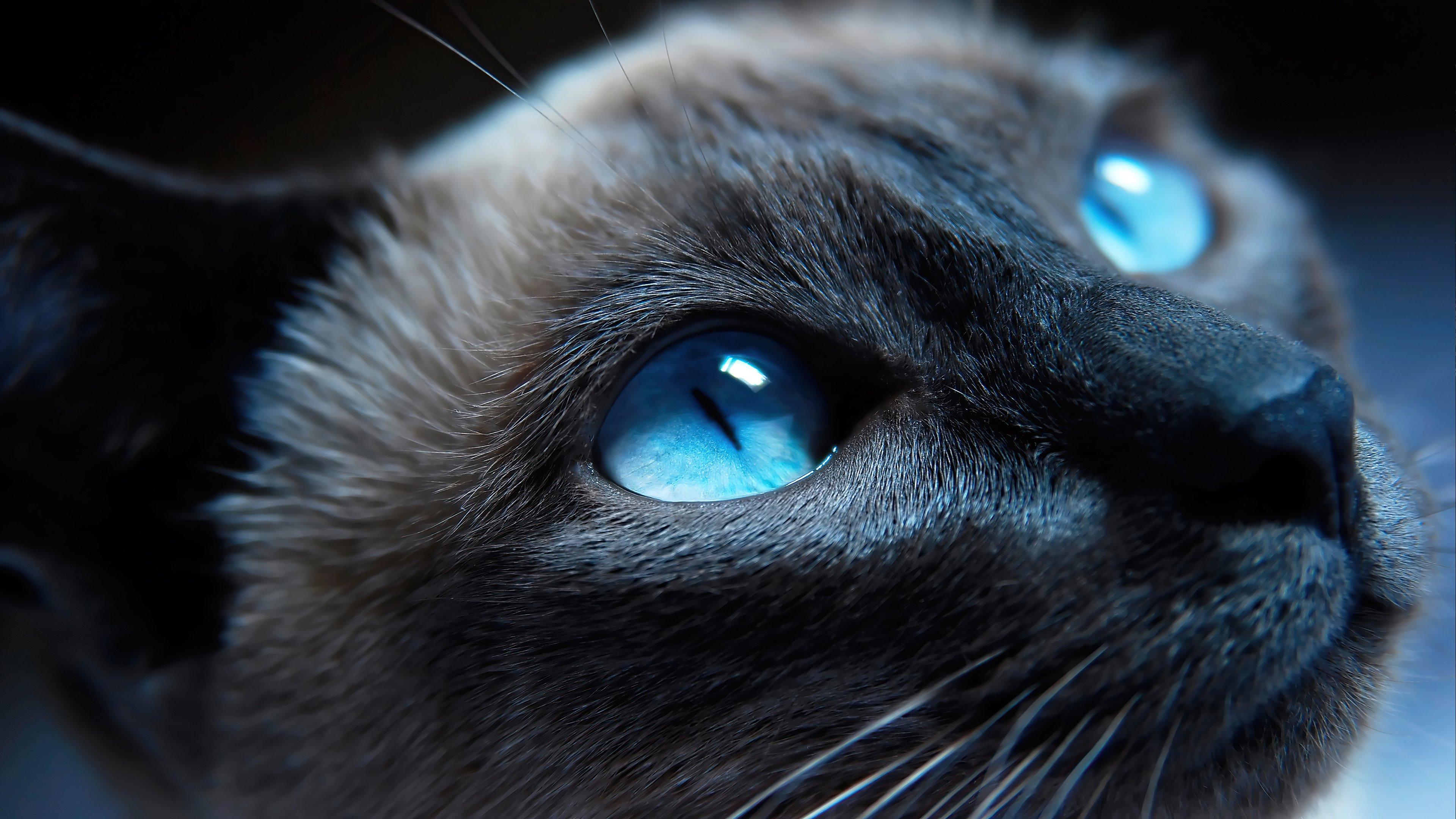 Fondos de pantalla Gato con ojos azules