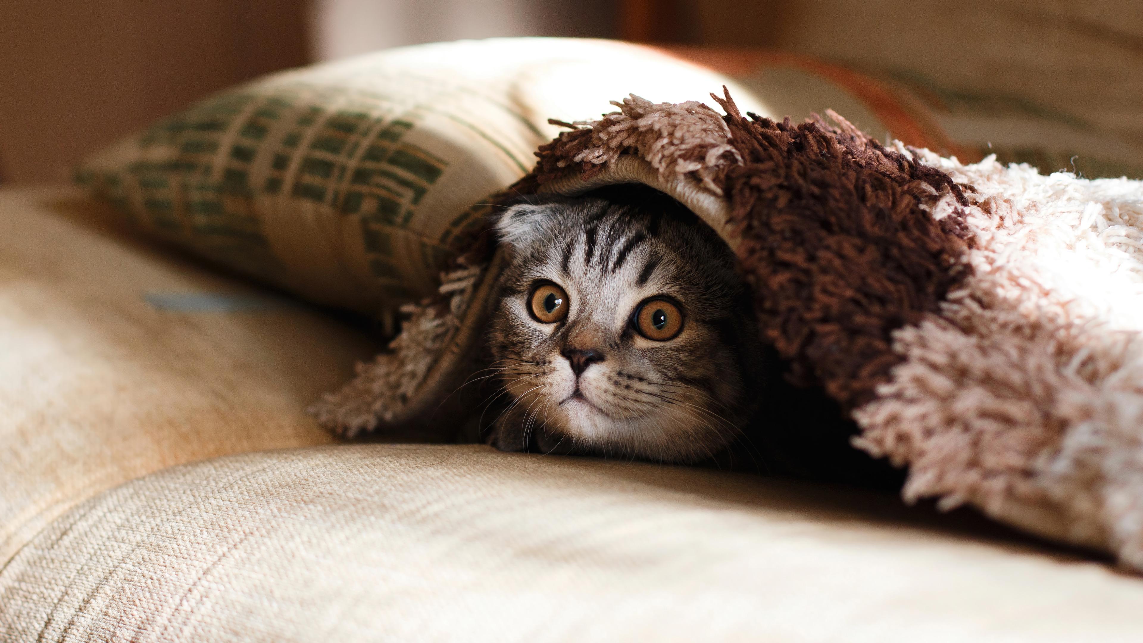 Fondos de pantalla Gato escondiendose en cobijas