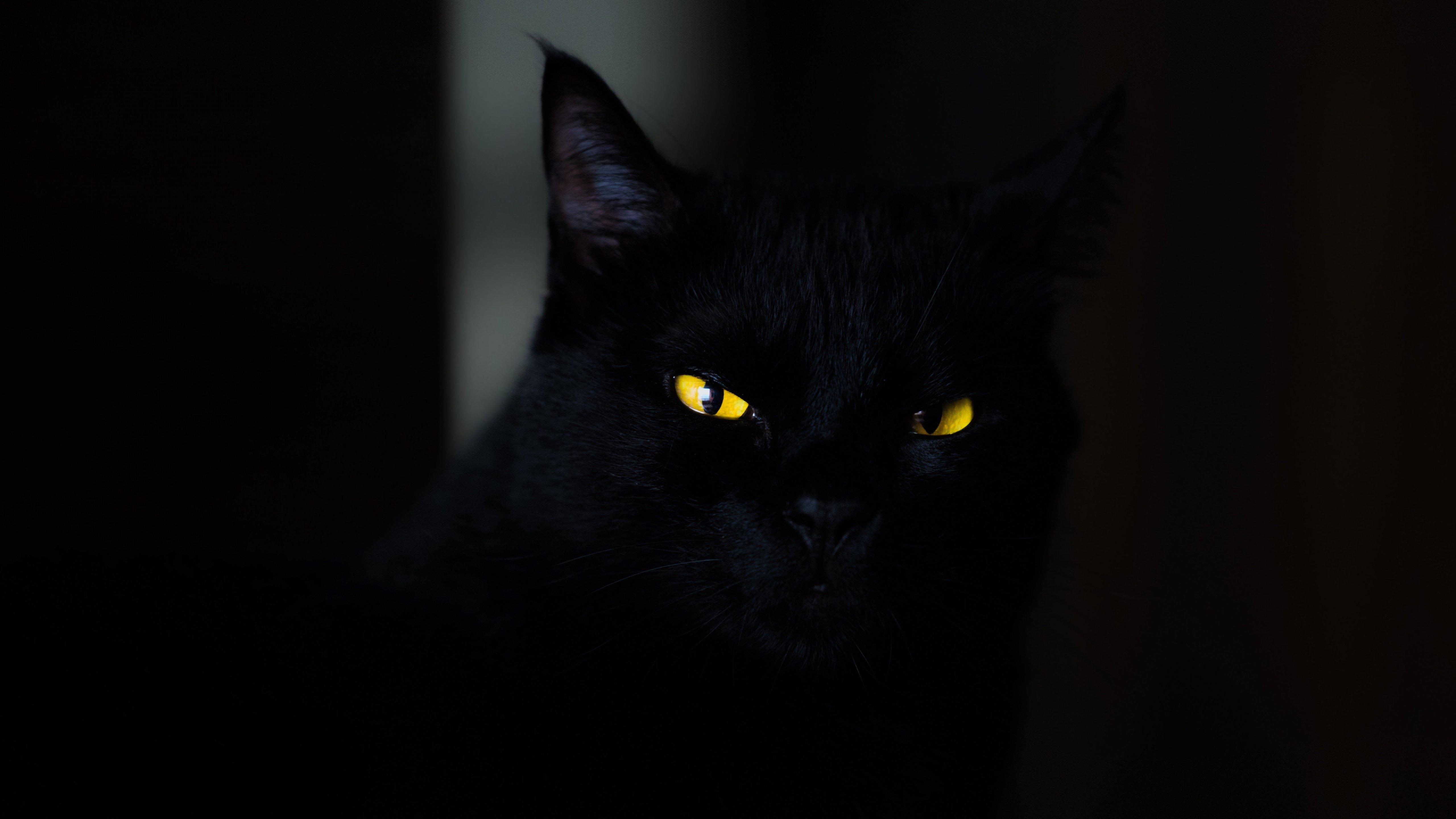 Fondos de pantalla Gato Negro en la oscuridad
