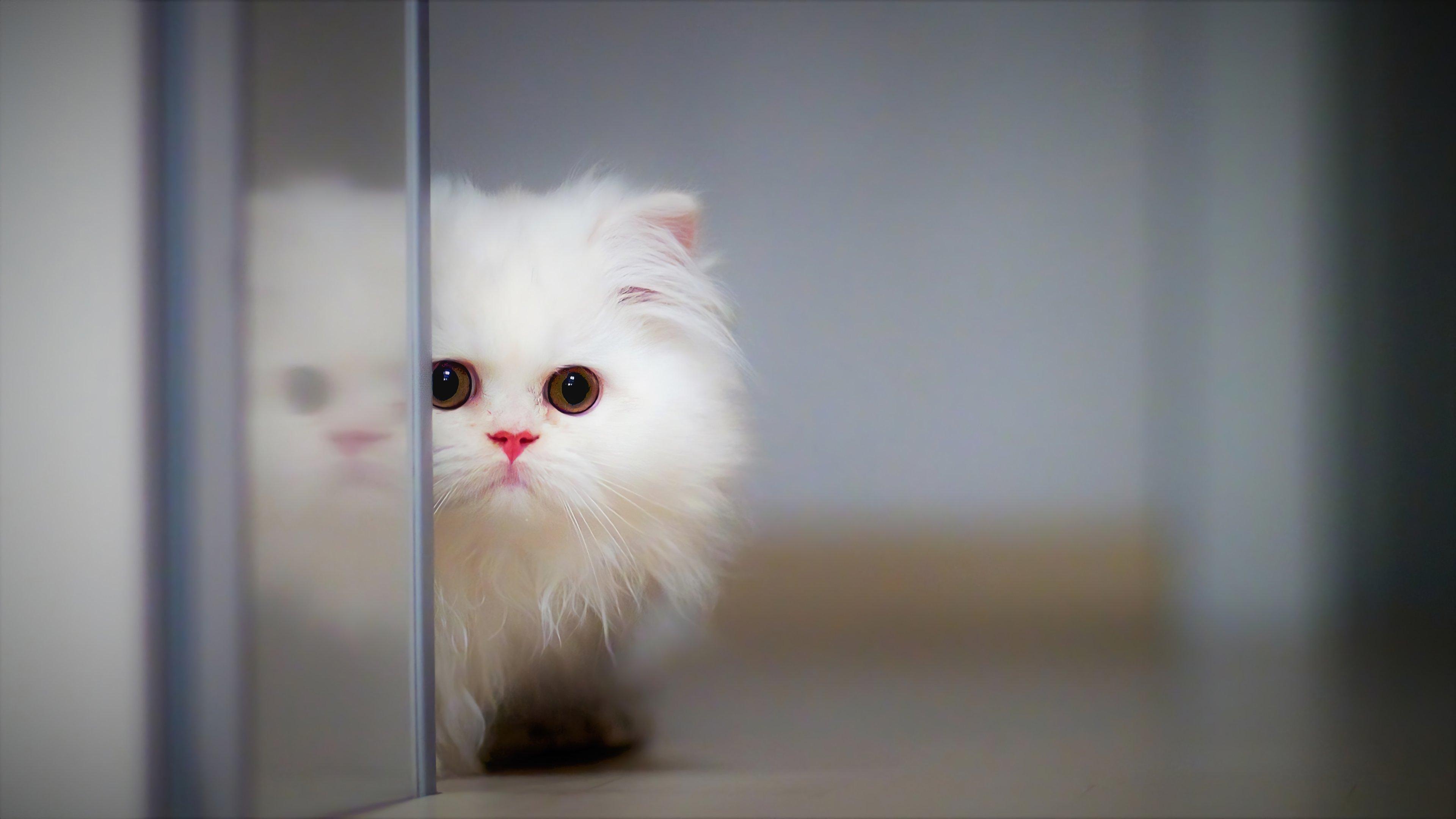 Fondos de pantalla Gato peludo