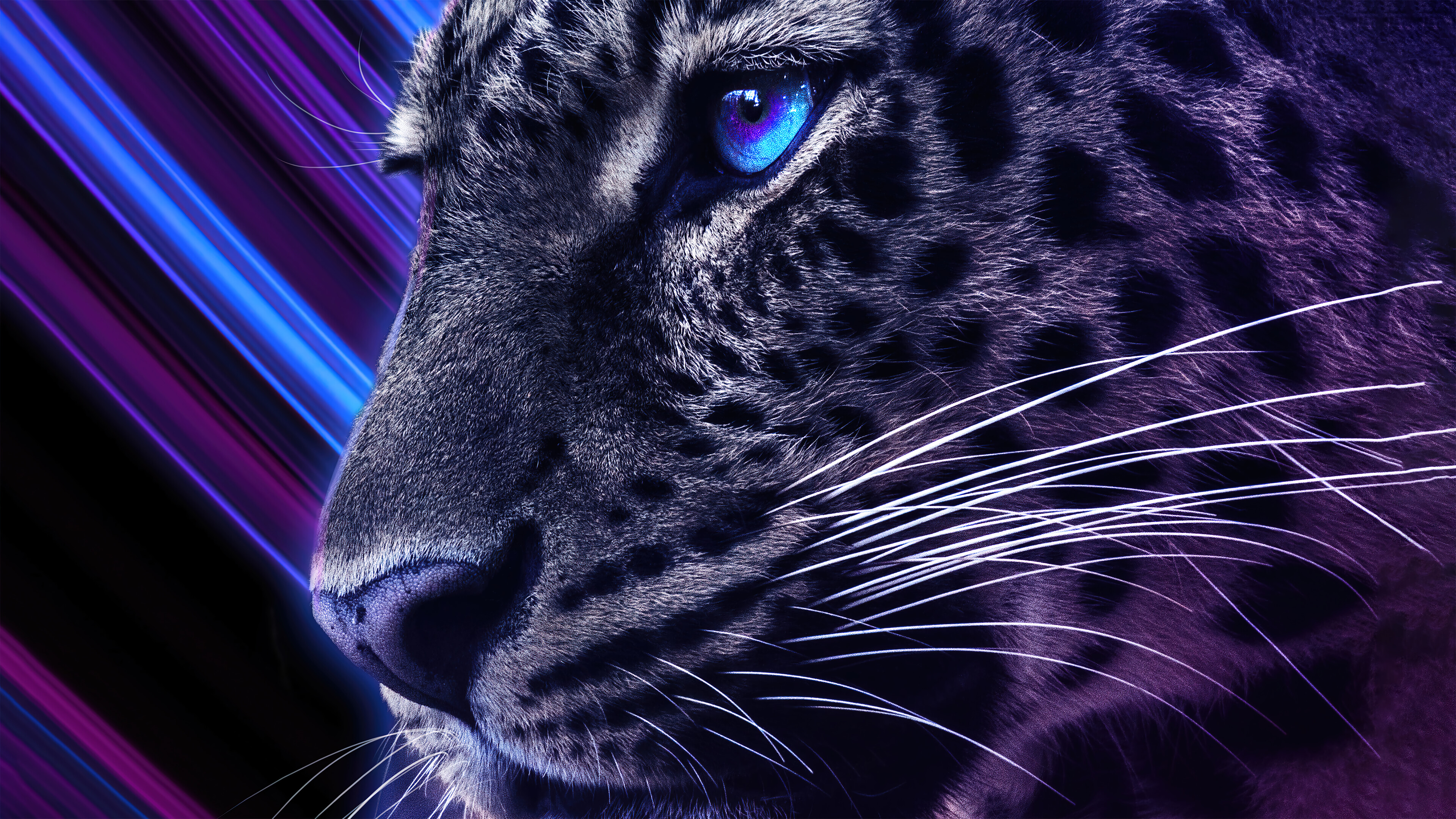 Fondos de pantalla Guepardo ojos azules