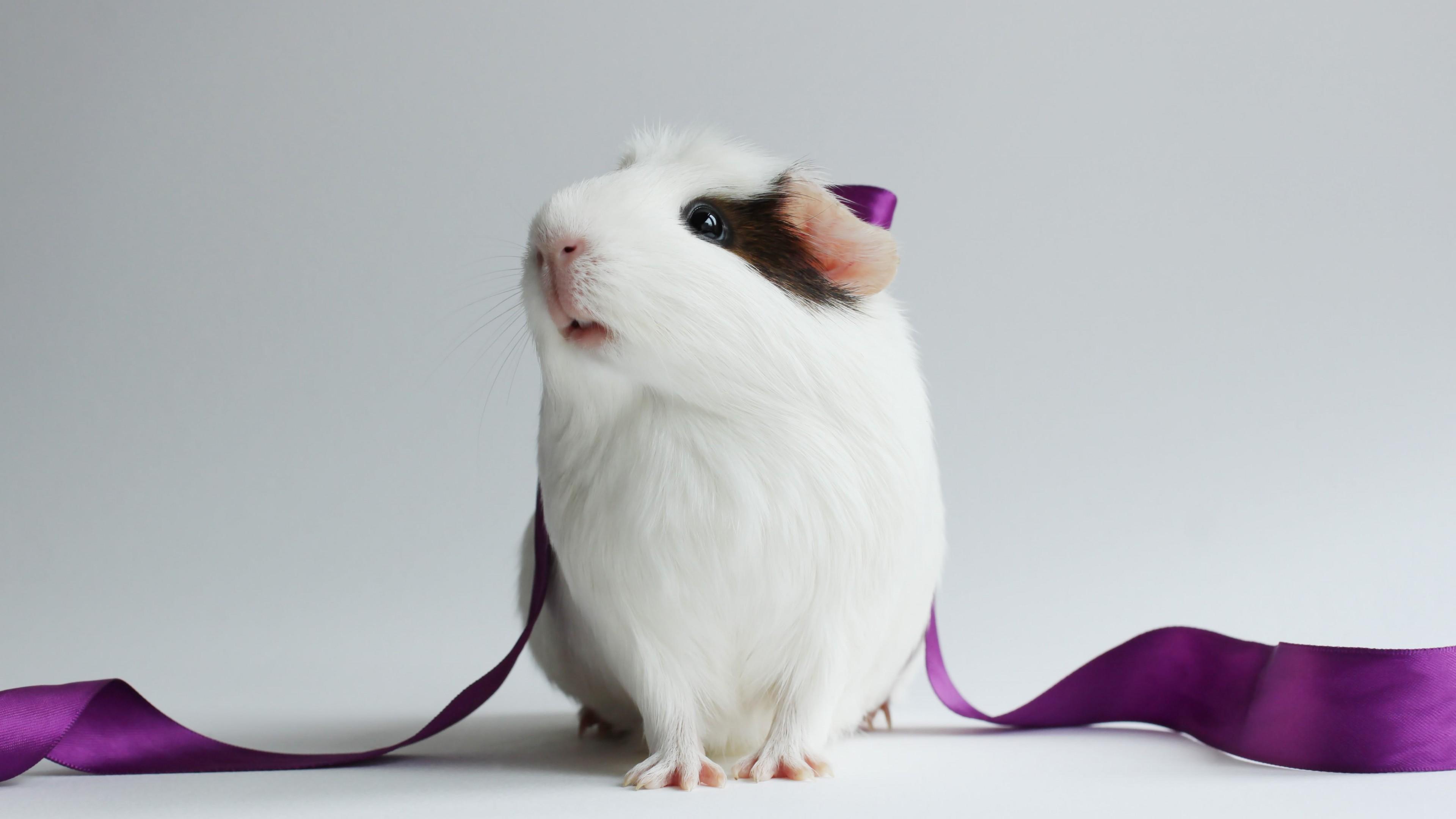 Fondos de pantalla Hamster