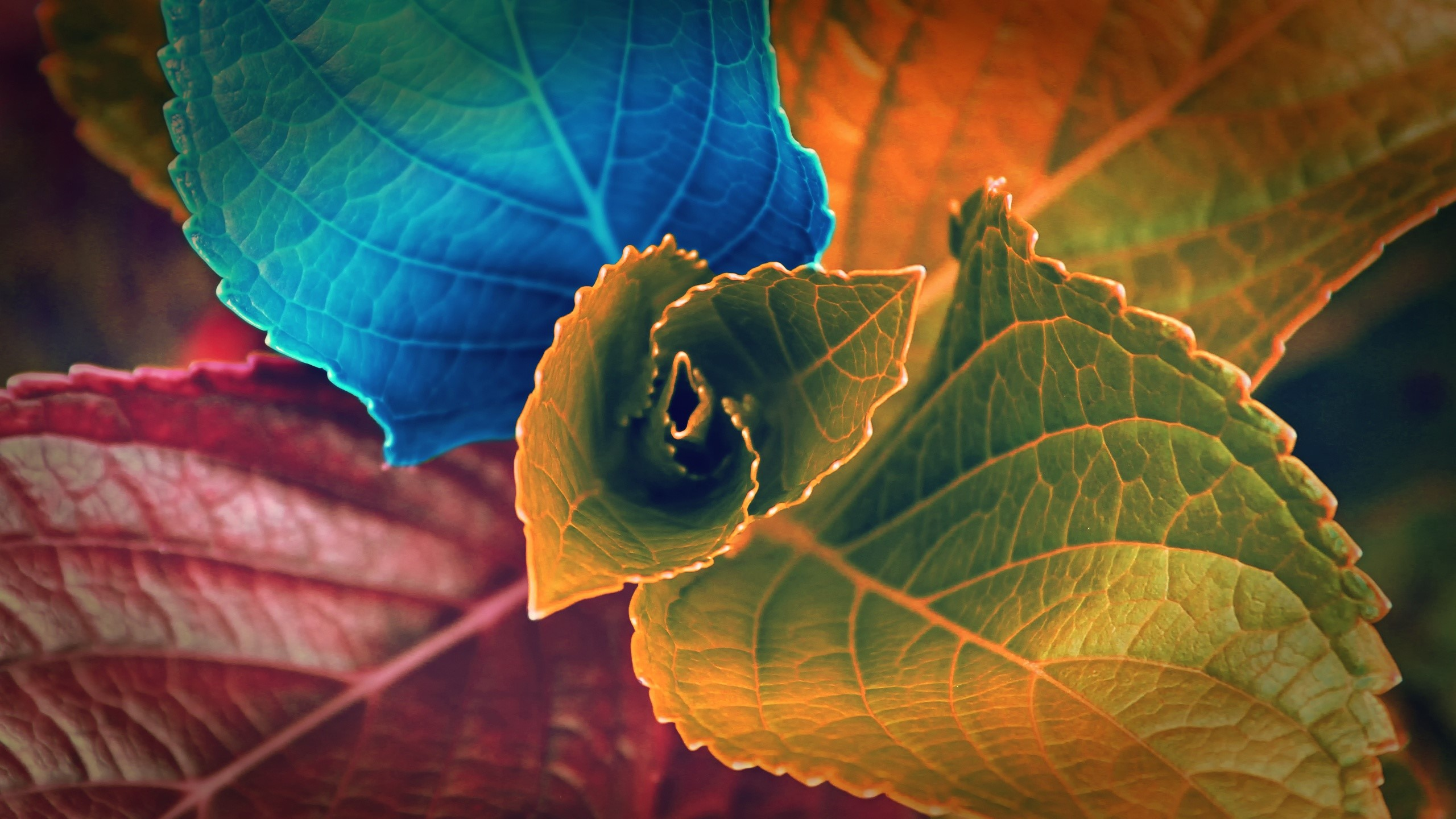 Wallpaper Colored leaves