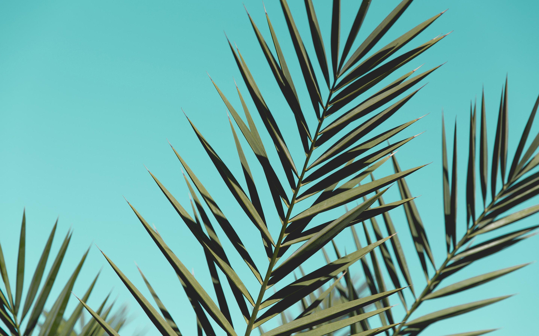 Fondos de pantalla Hojas de palmera