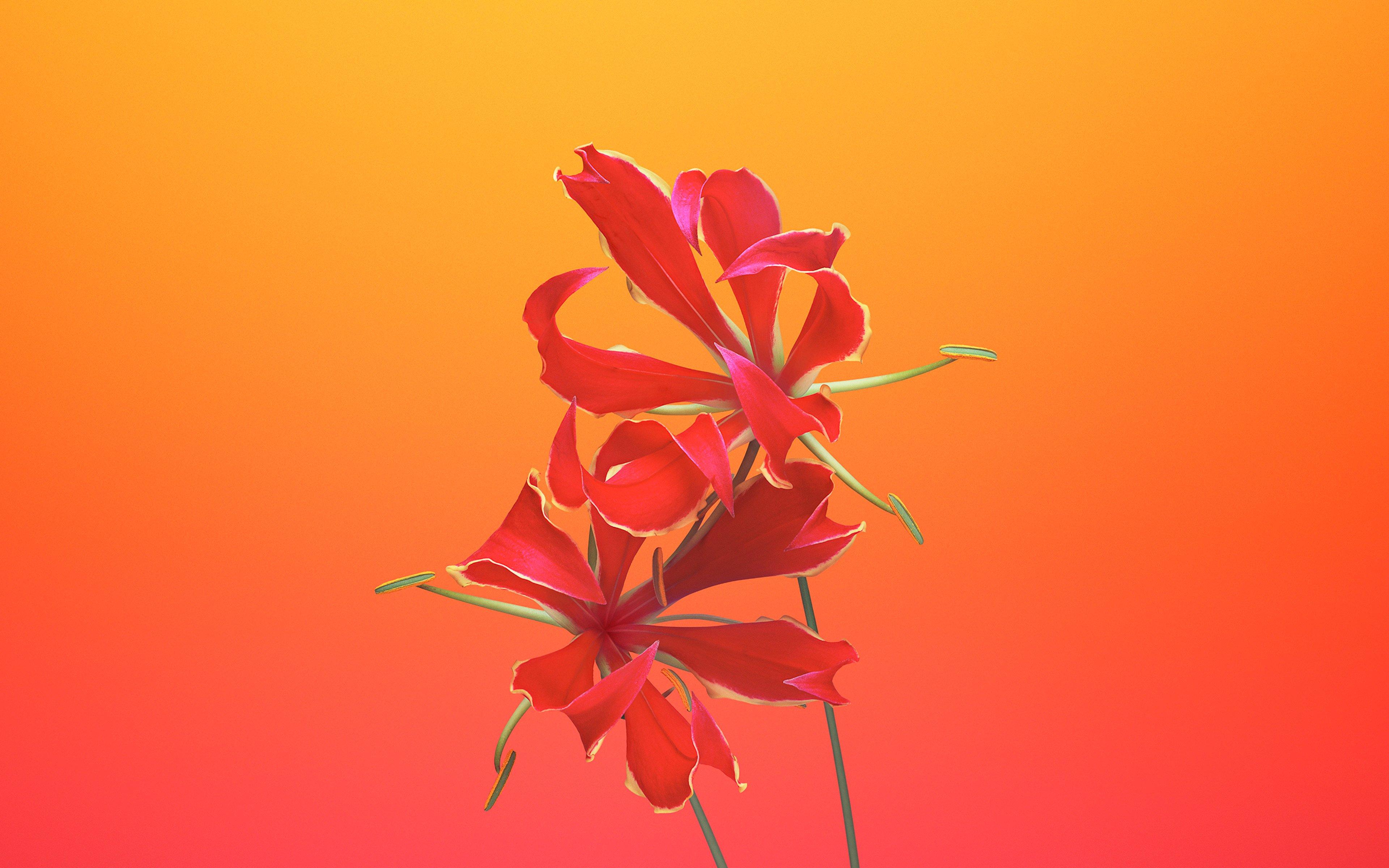 Fondos de pantalla IOS 11 Flor Gloriosa