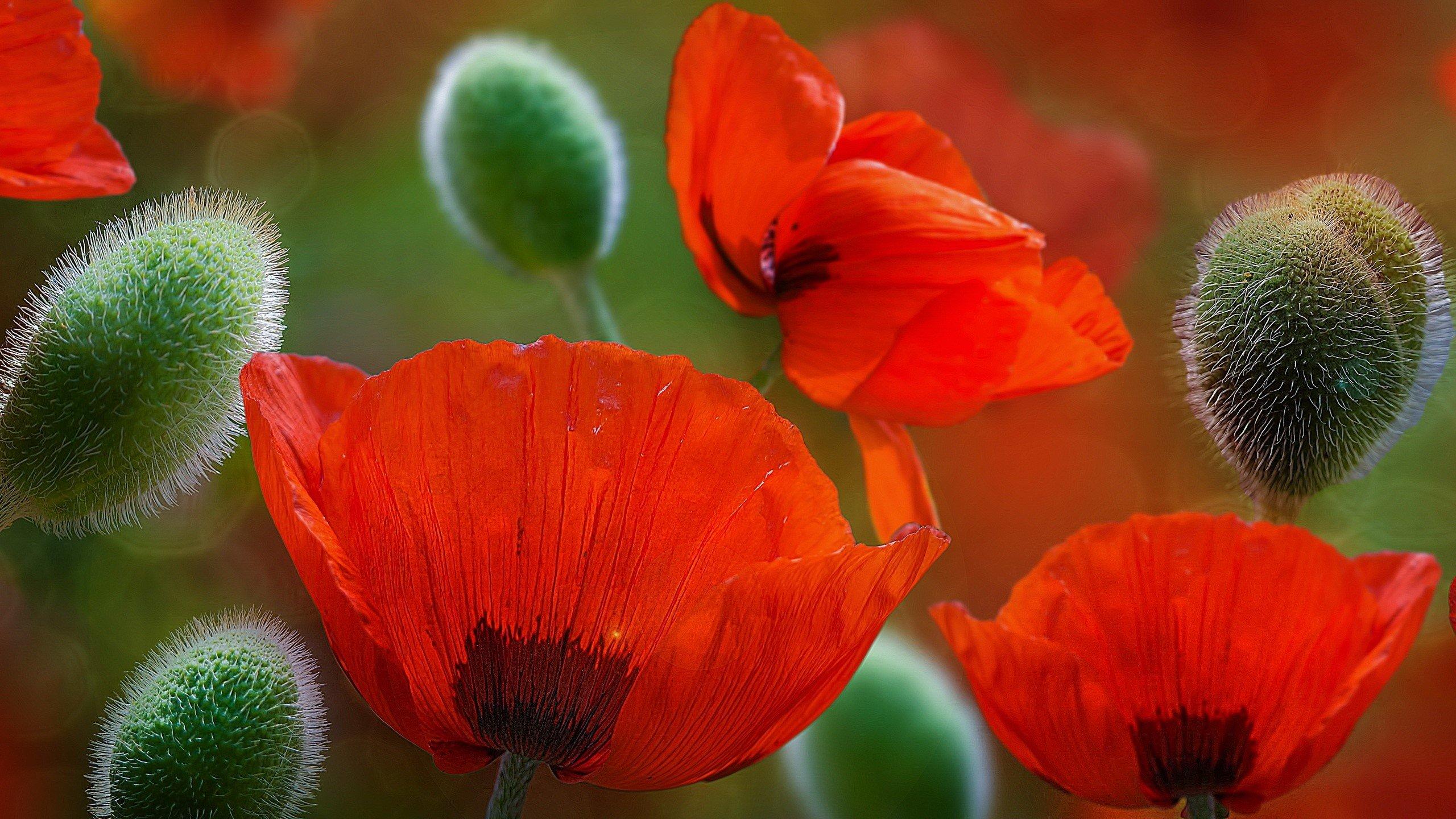 Fondos de pantalla Jardín de flores rojas