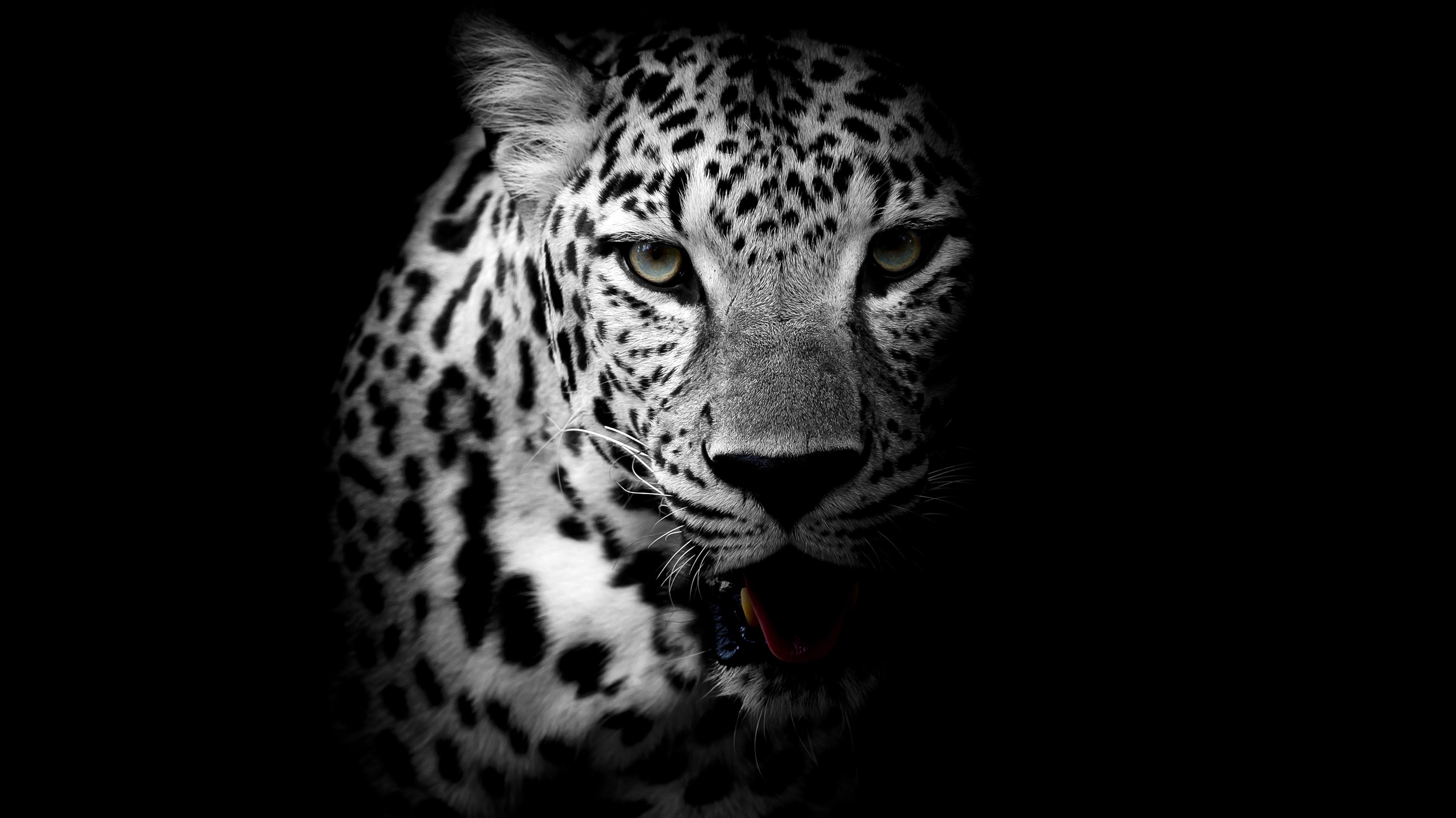 Fondos de pantalla Leopardo en Blanco y Negro