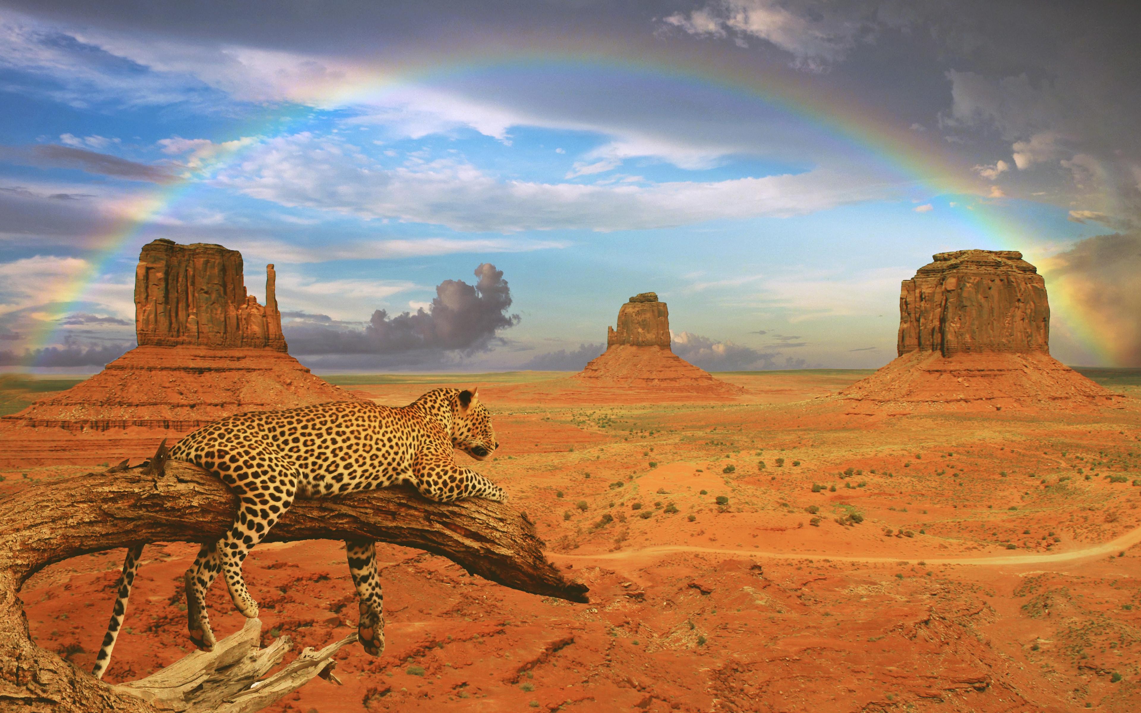 Fondos de pantalla Leopardo en paisaje desértico con arcoiris