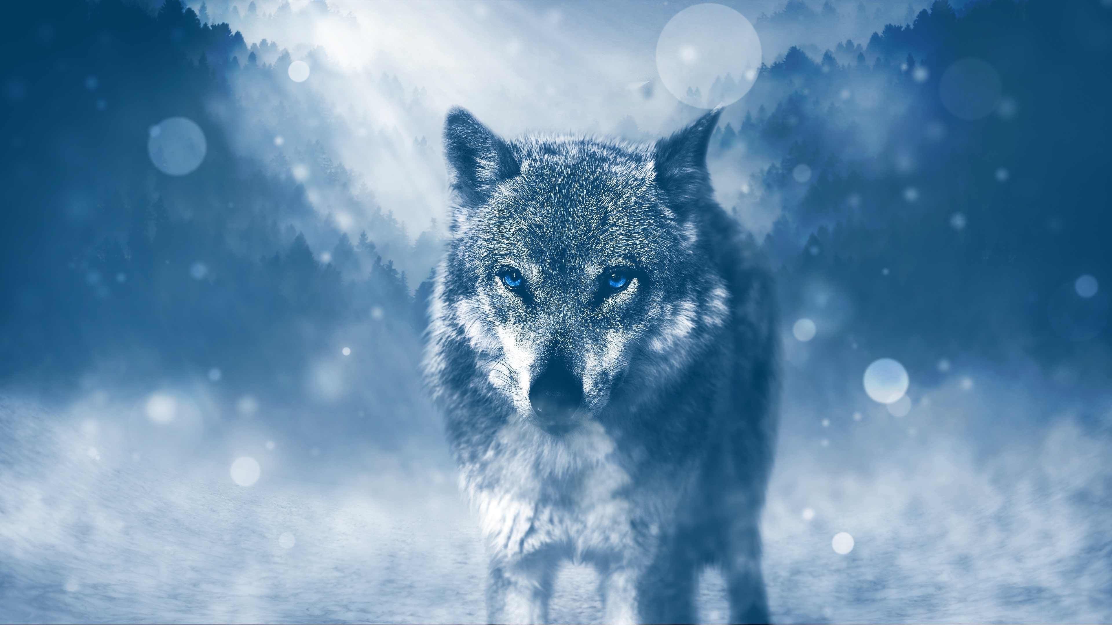 Wallpaper Wolf with blue eyes