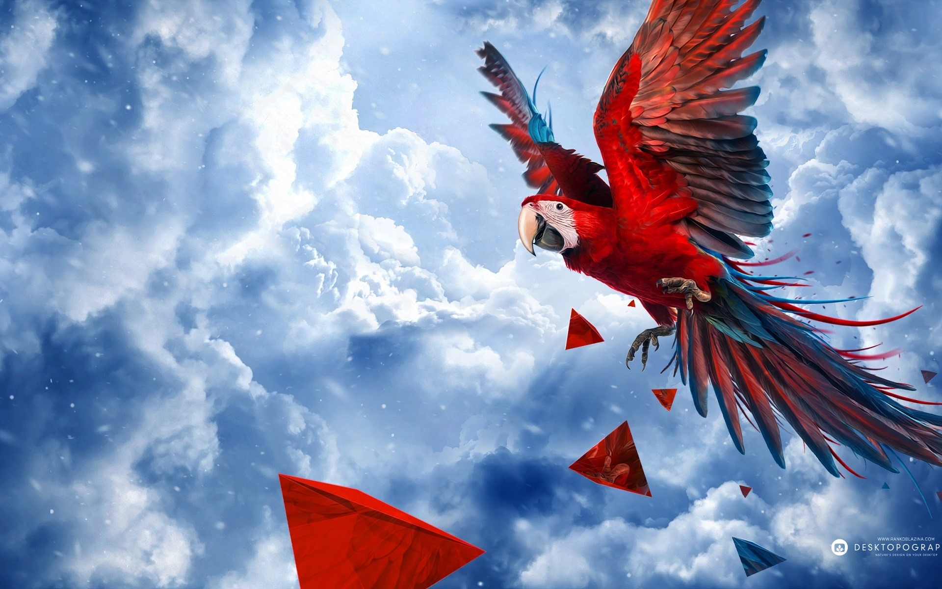 Wallpaper Parrot flying