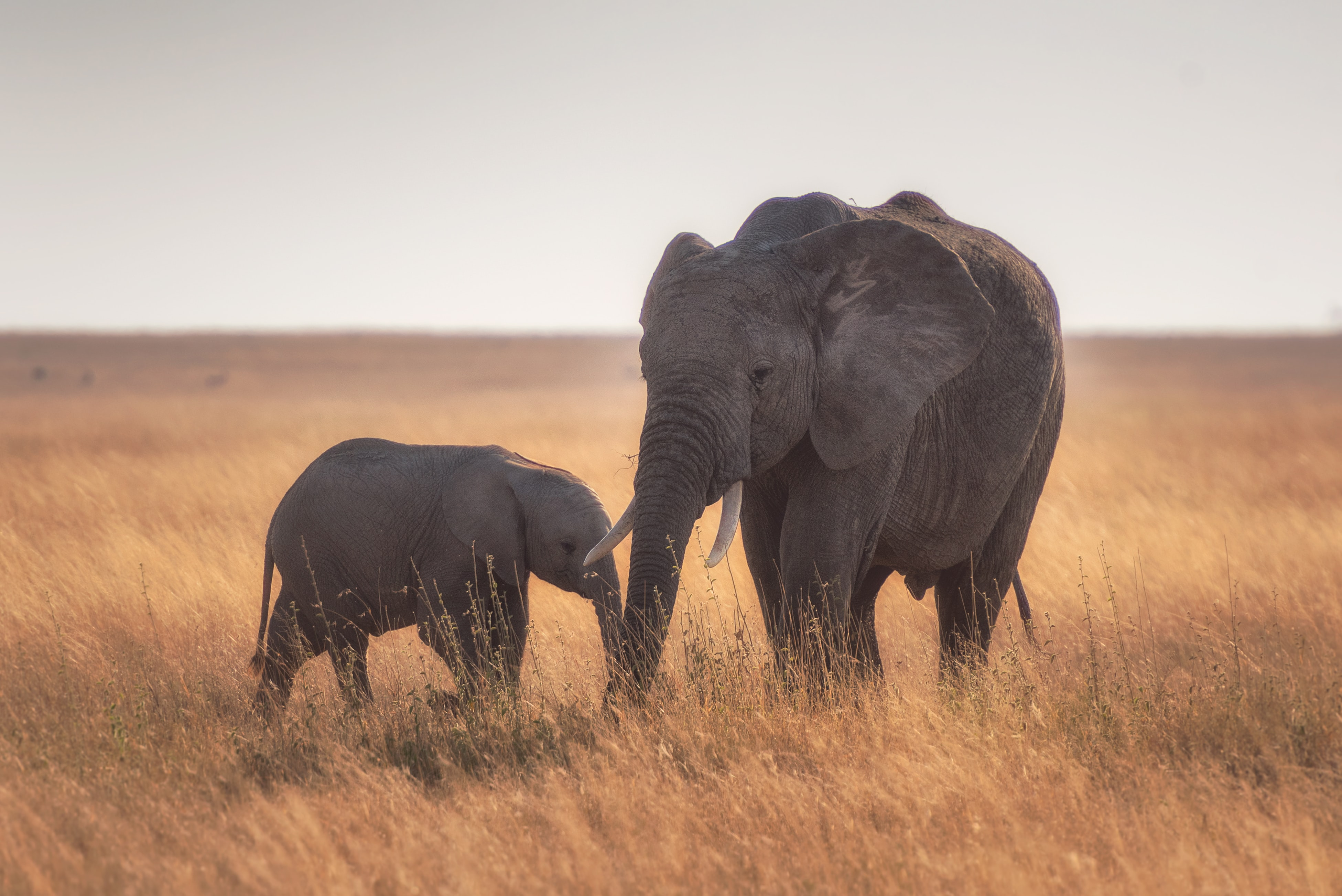Fondos de pantalla Madre y bebe elefante