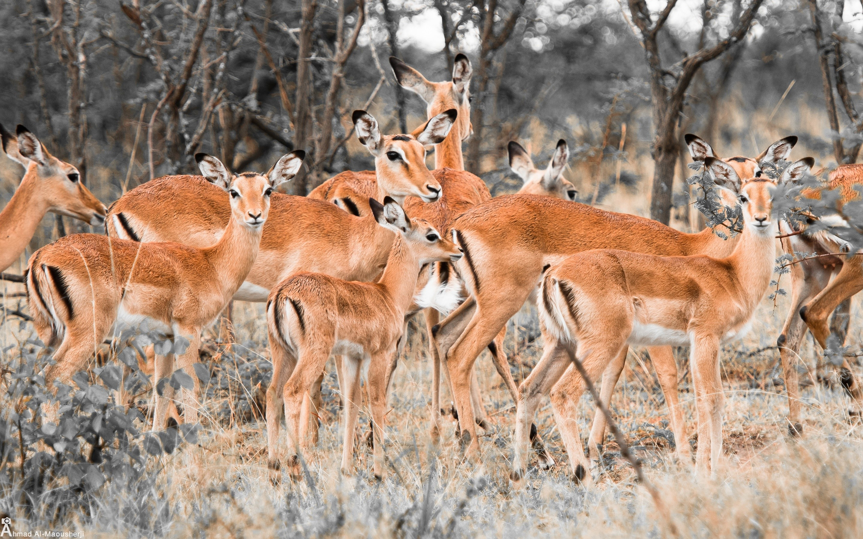 Wallpaper Herd of deer