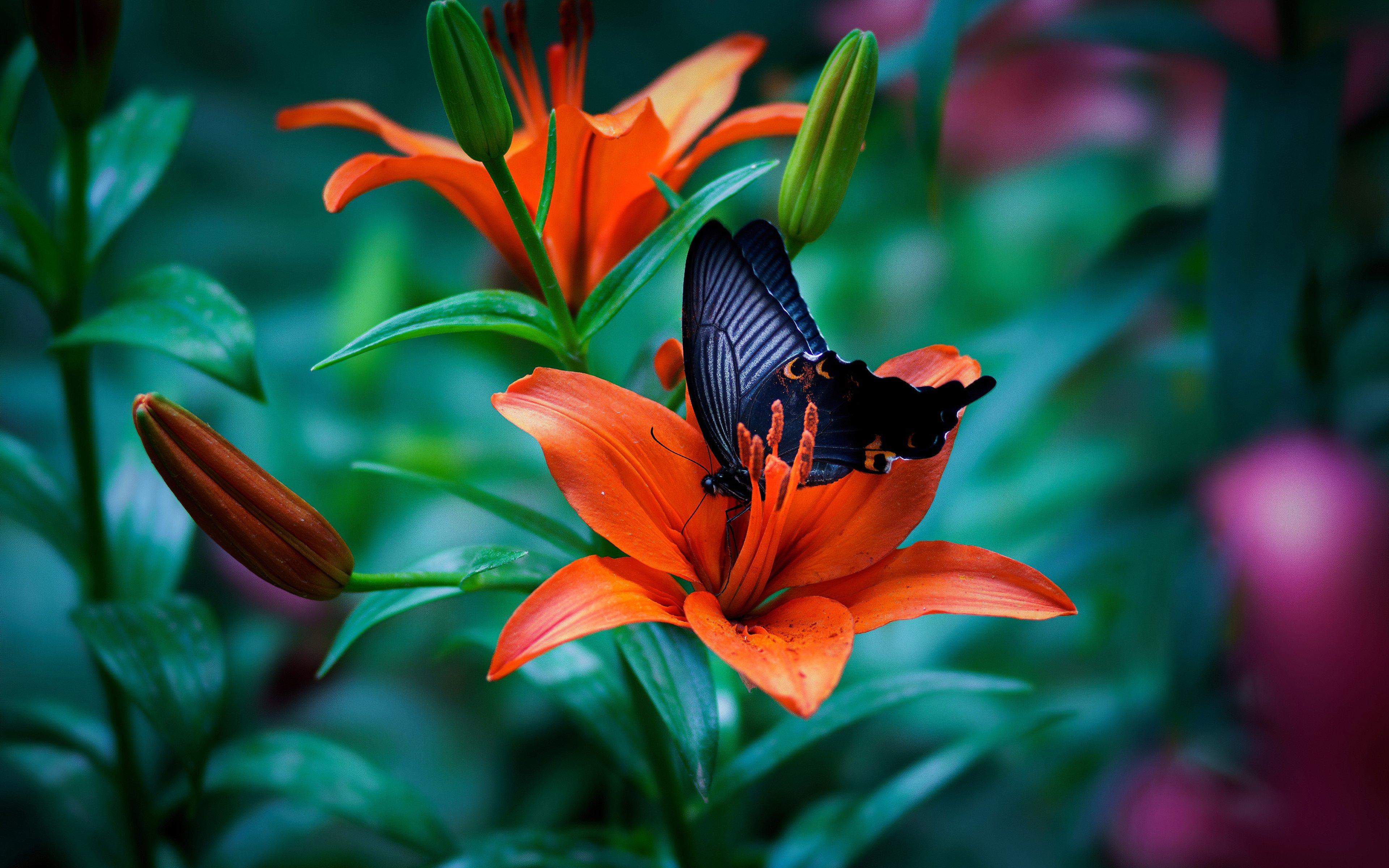 Wallpaper Butterfly in flower