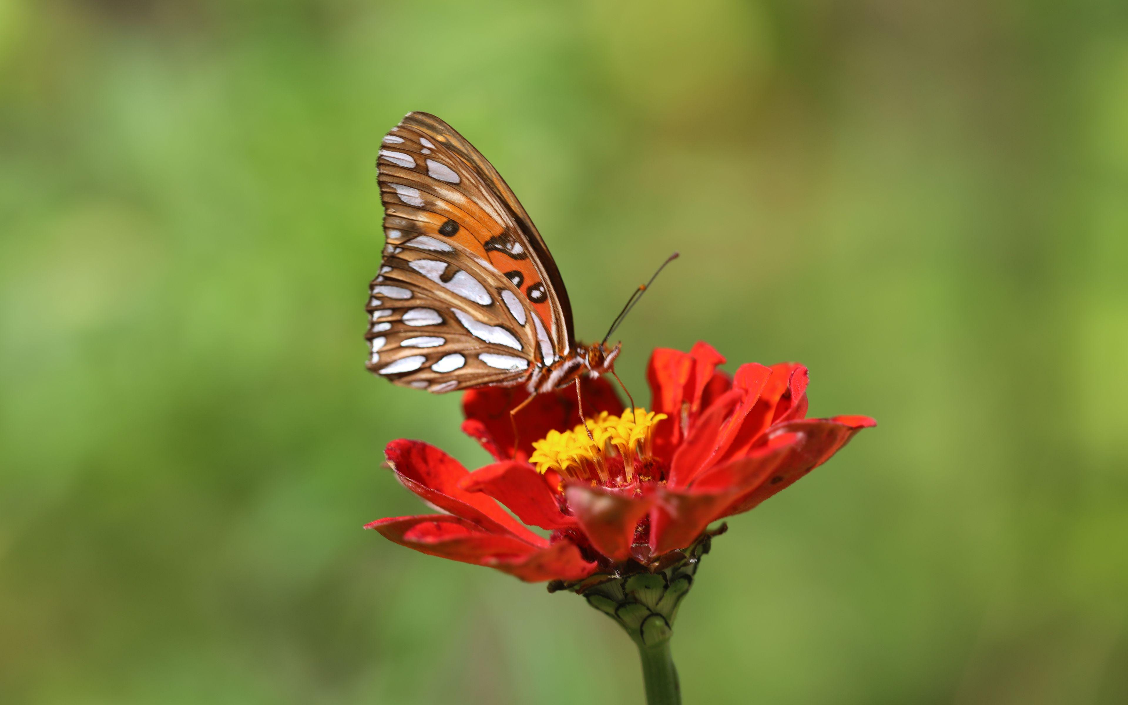 Fondos de pantalla Mariposa en flor roja