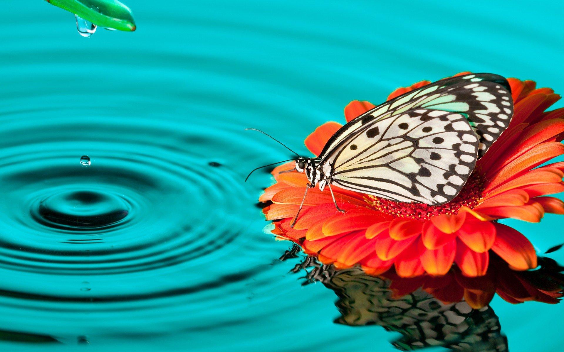 Fondos de pantalla Mariposa en flor sobre el agua