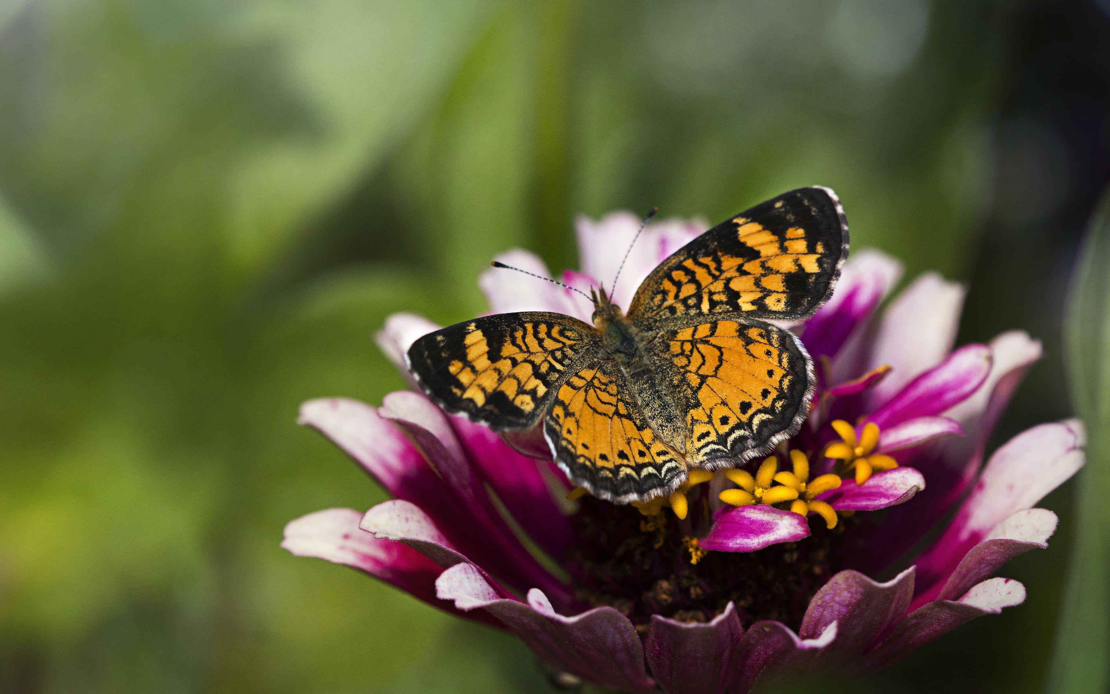 Wallpaper Butterfly over flower