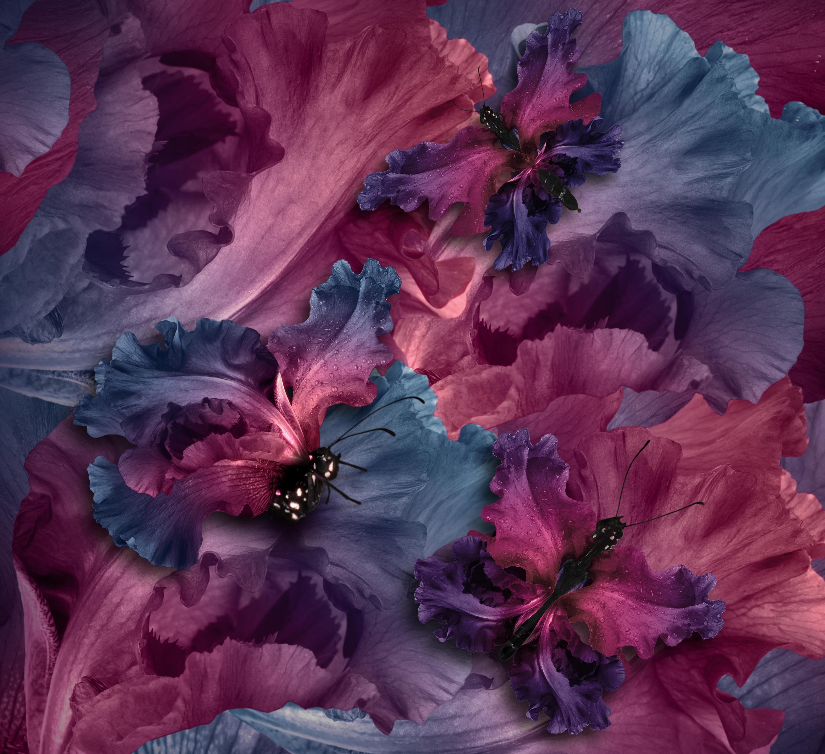 Wallpaper Irises butterflies