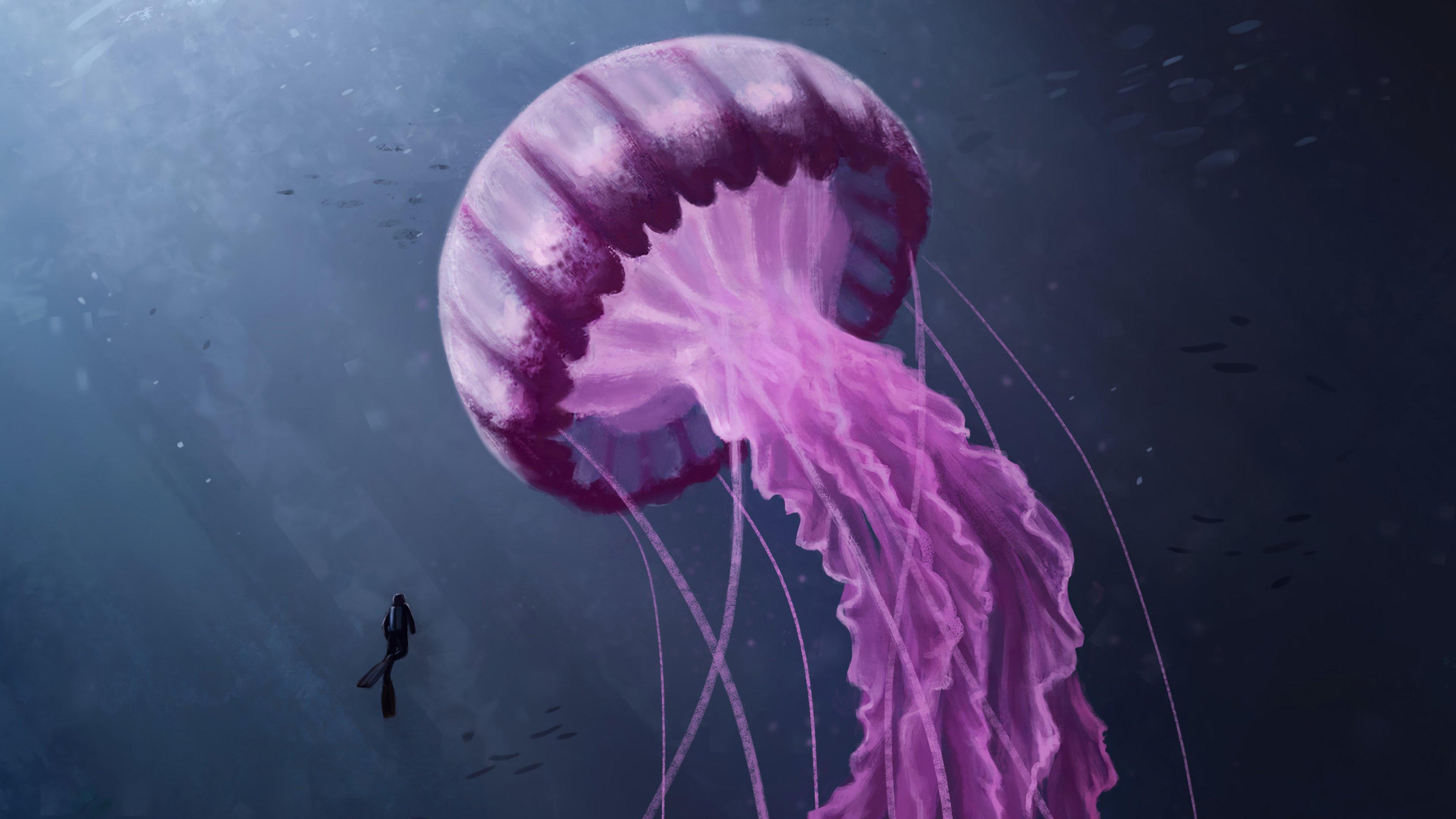 Fondos de pantalla Medusa rosa bajo el mar