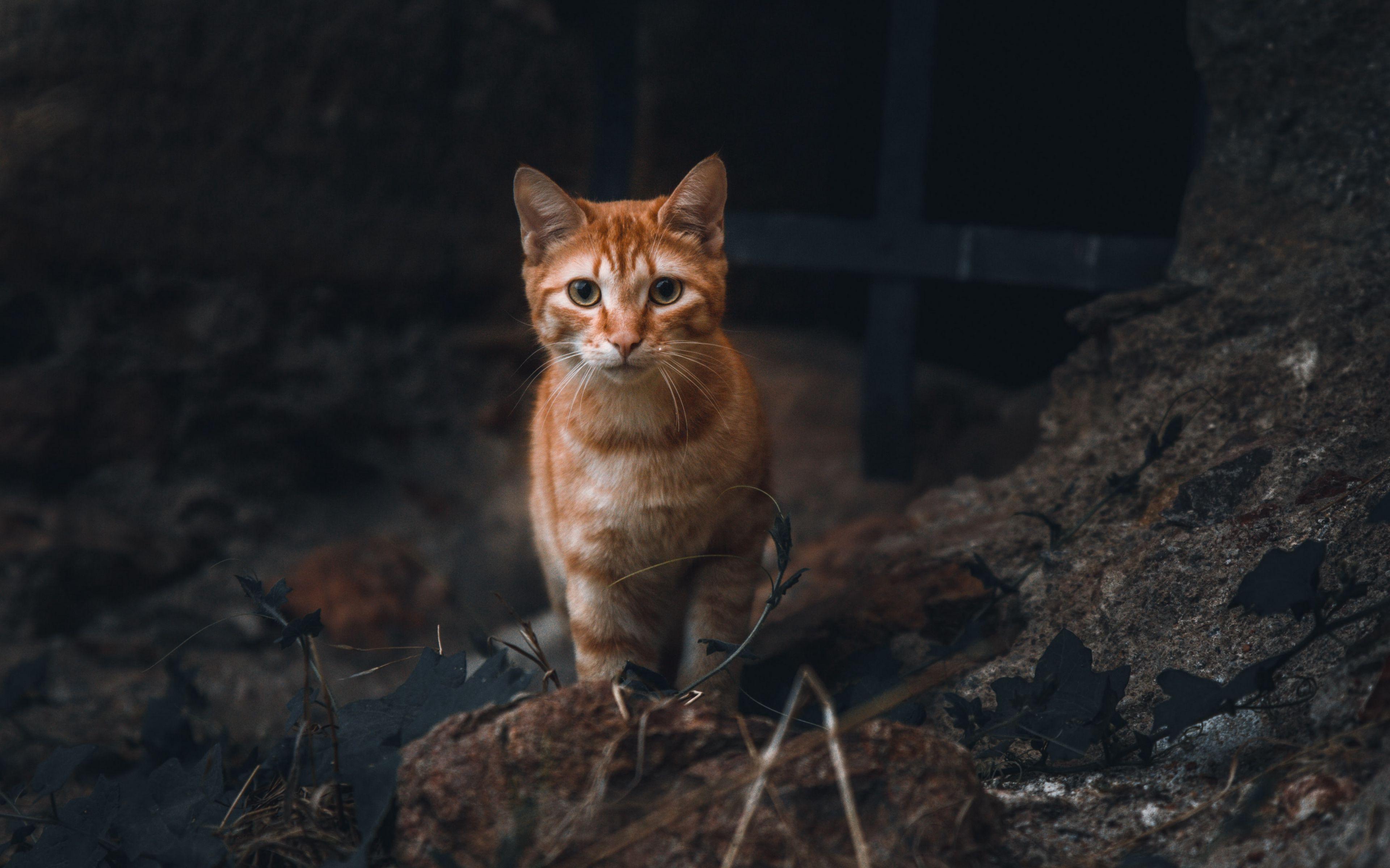 Fondos de pantalla Mirada de gato