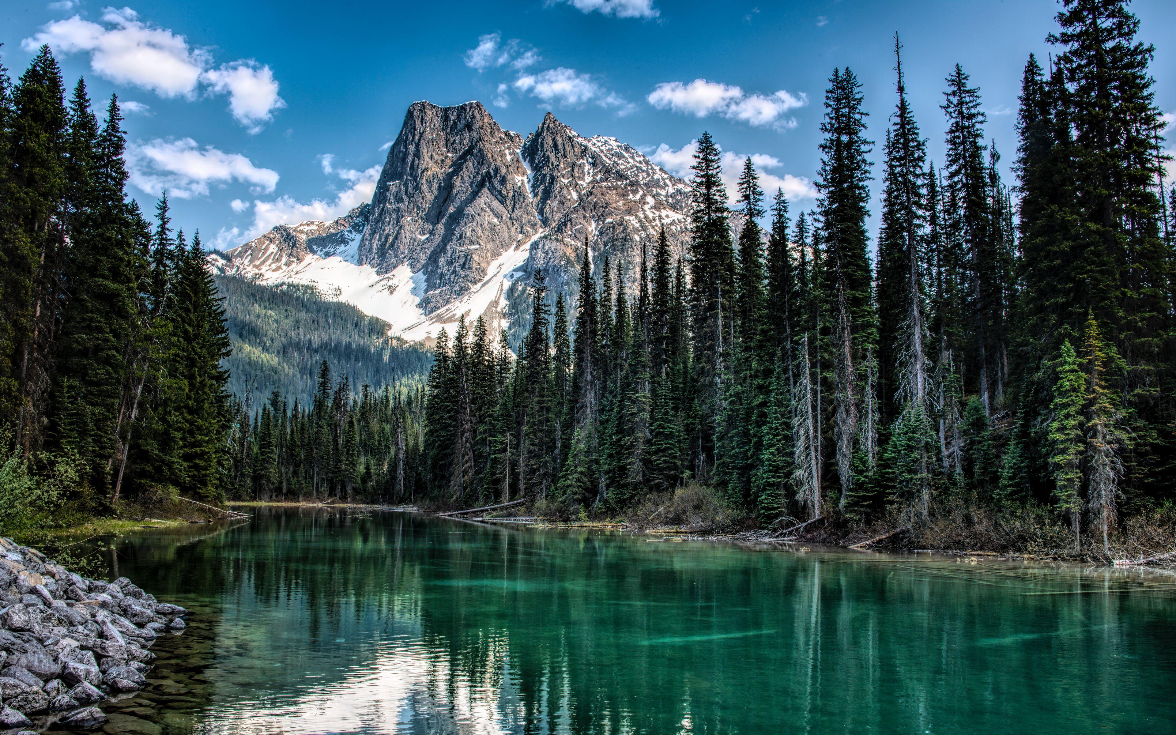 Fondos de pantalla Montaña en bosque