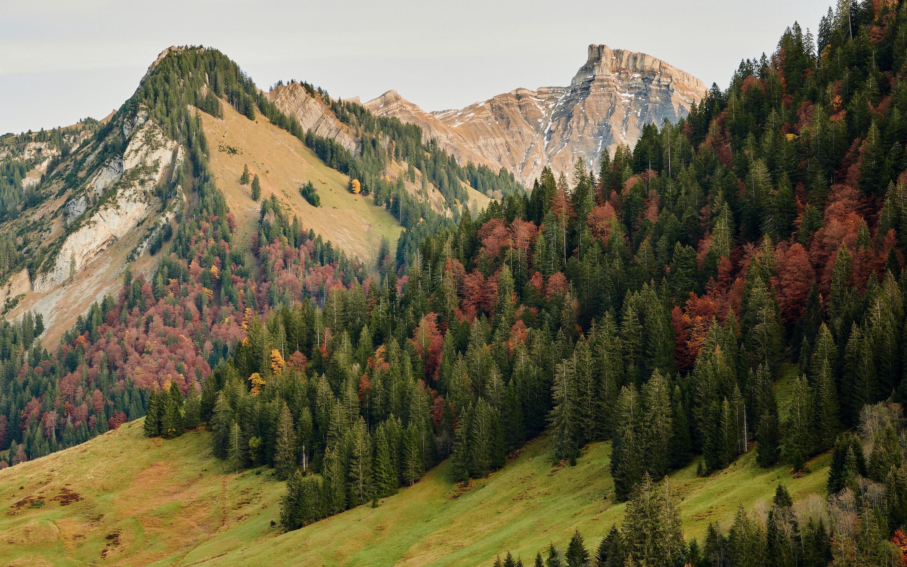 Fondos de pantalla Montañas en bosque durante el otoño