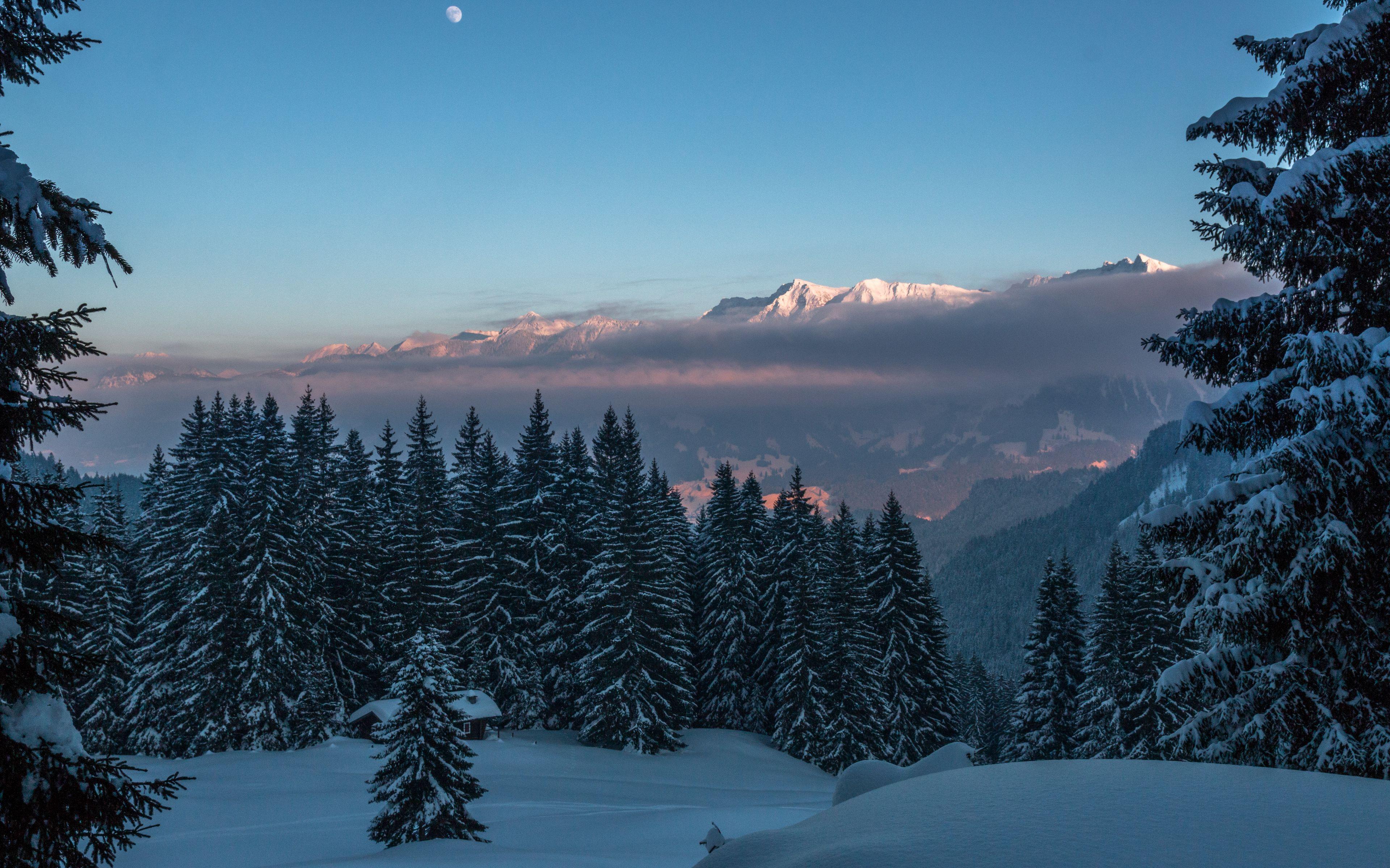 Fondos de pantalla Montañas en el bosque lleno de nieve