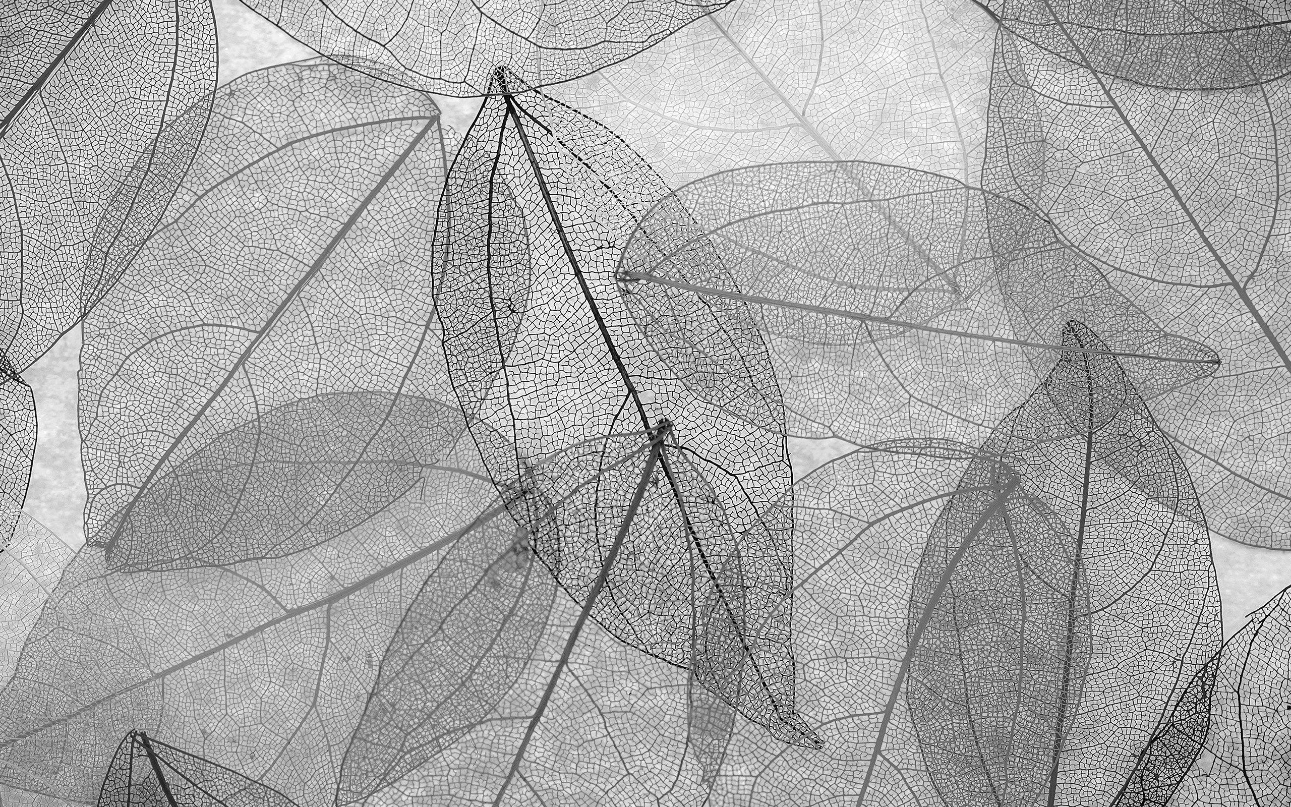 Fondos de pantalla Naturaleza Hojas blanco y negro