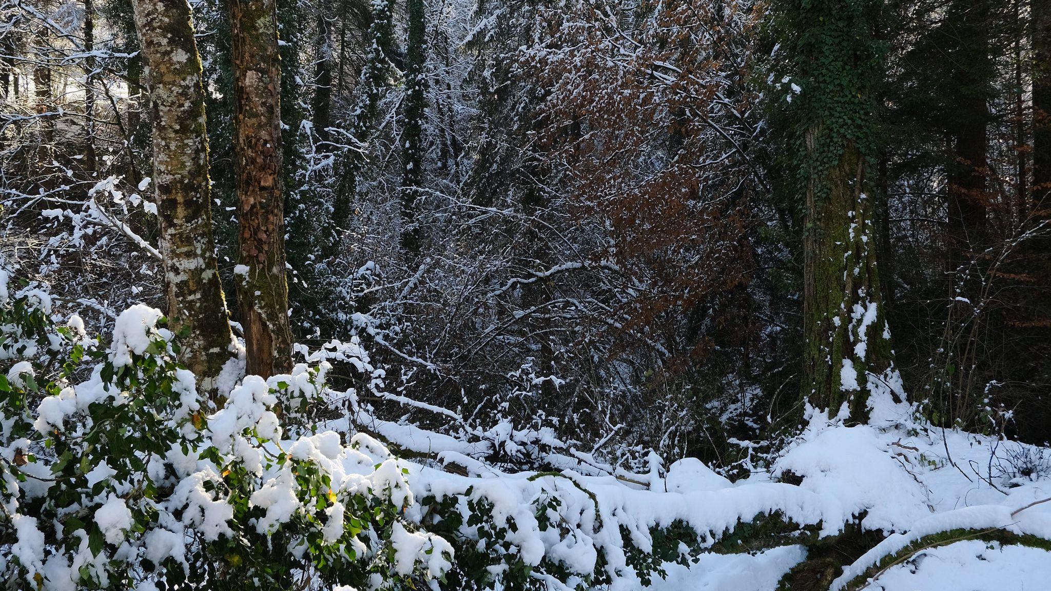 Fondos de pantalla Nieve en el bosque