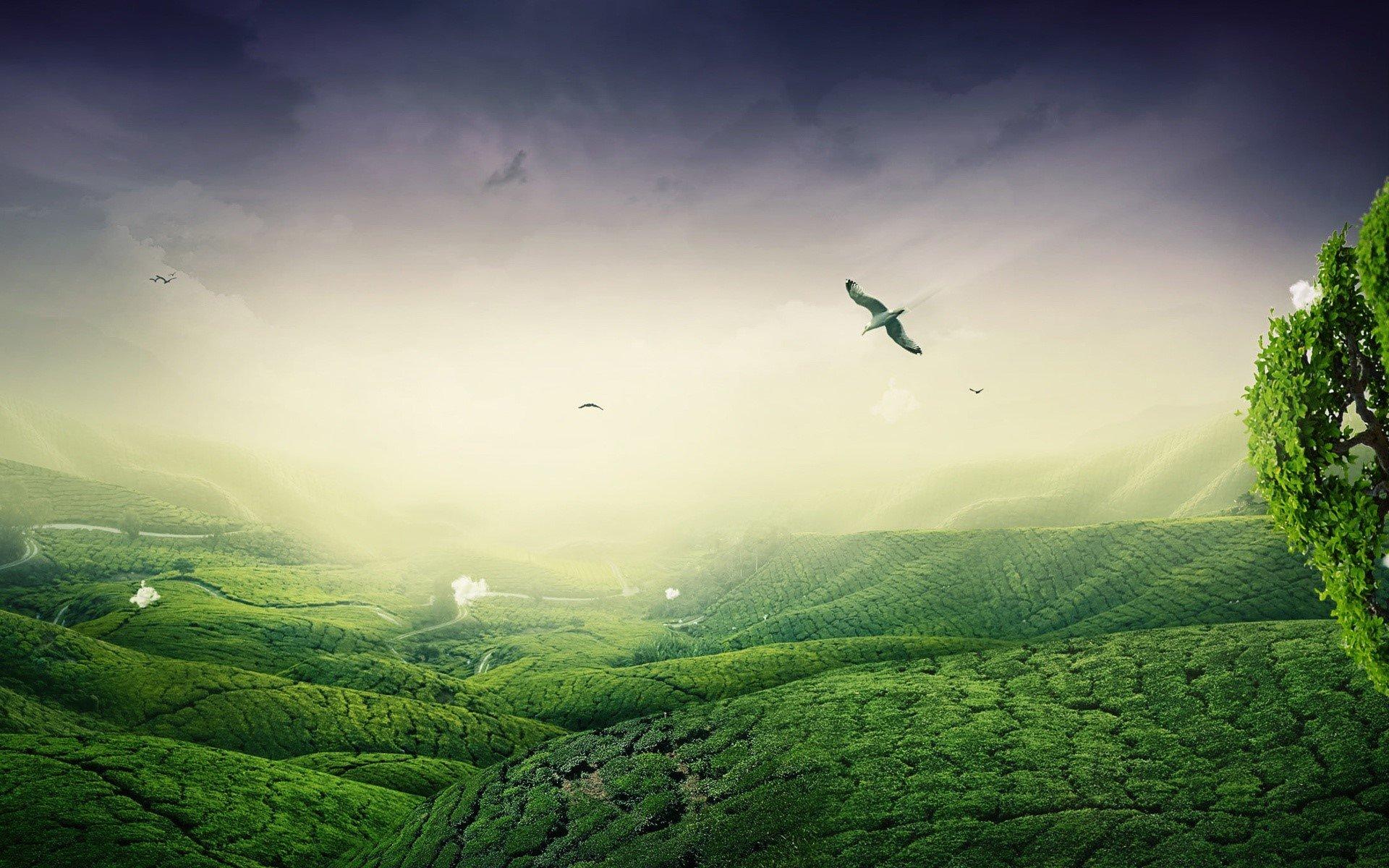 Wallpaper Paisaje verde Images