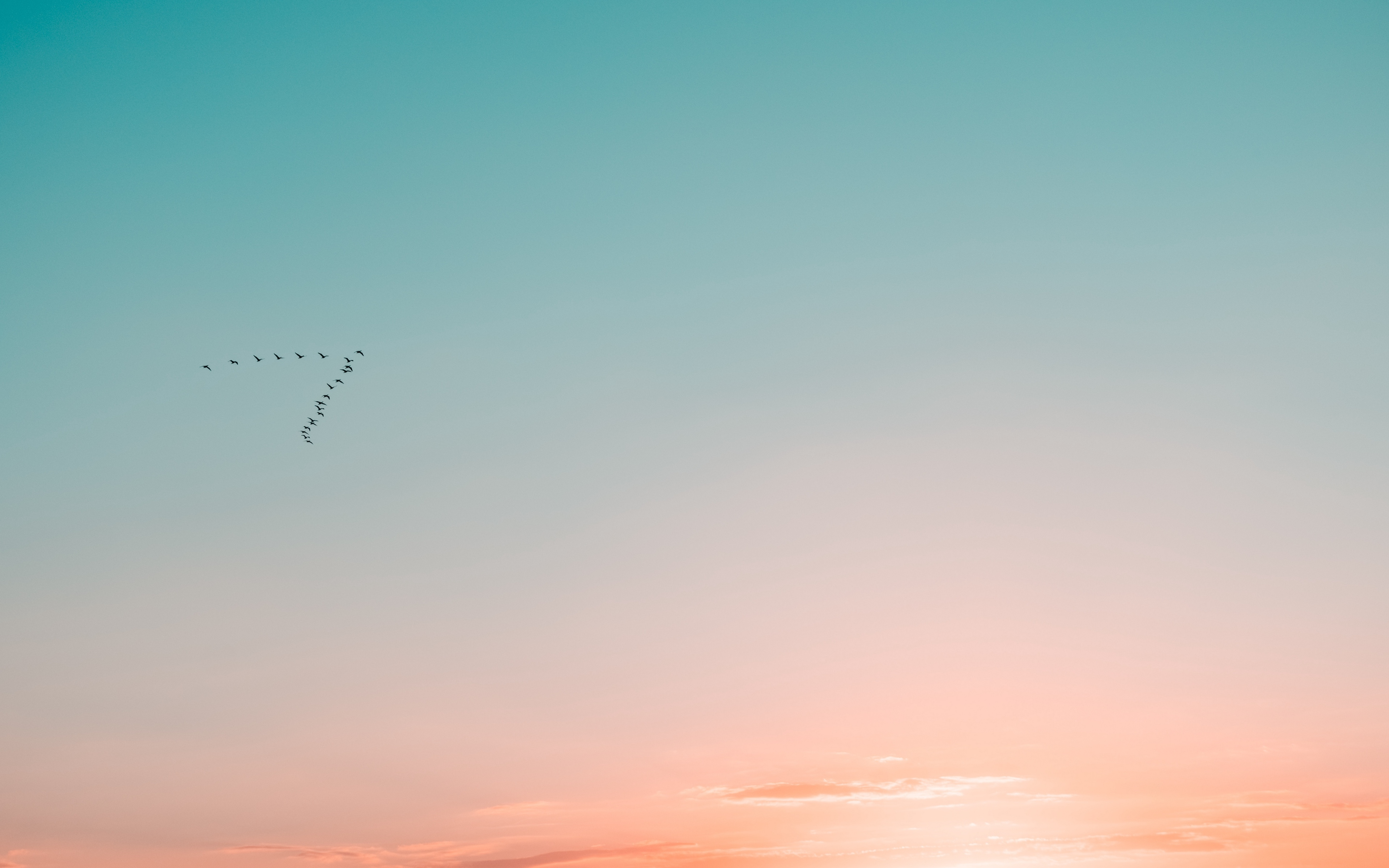 Wallpaper Birds flying in pastel sky