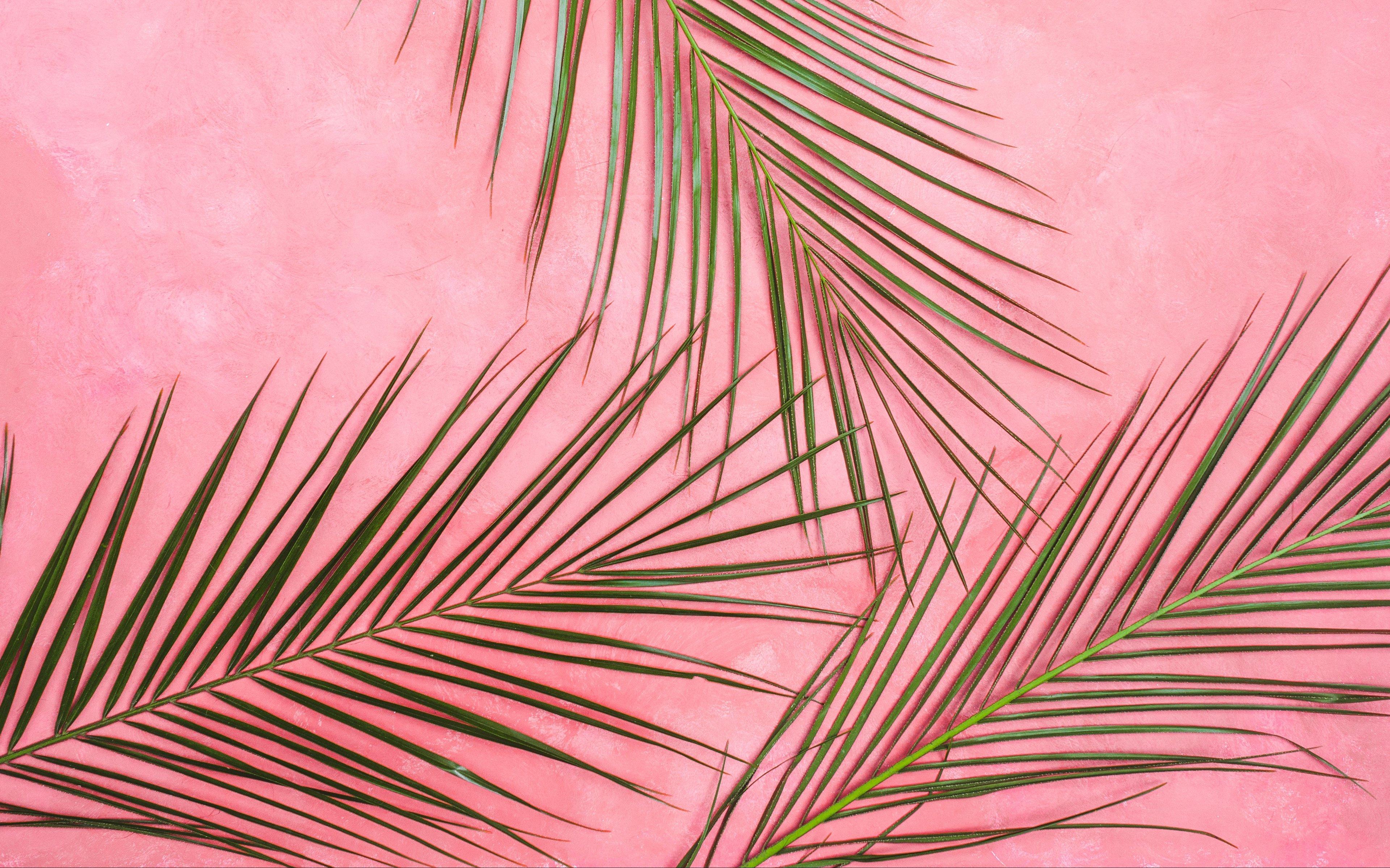 Fondos de pantalla Palmas en pared rosa pastel