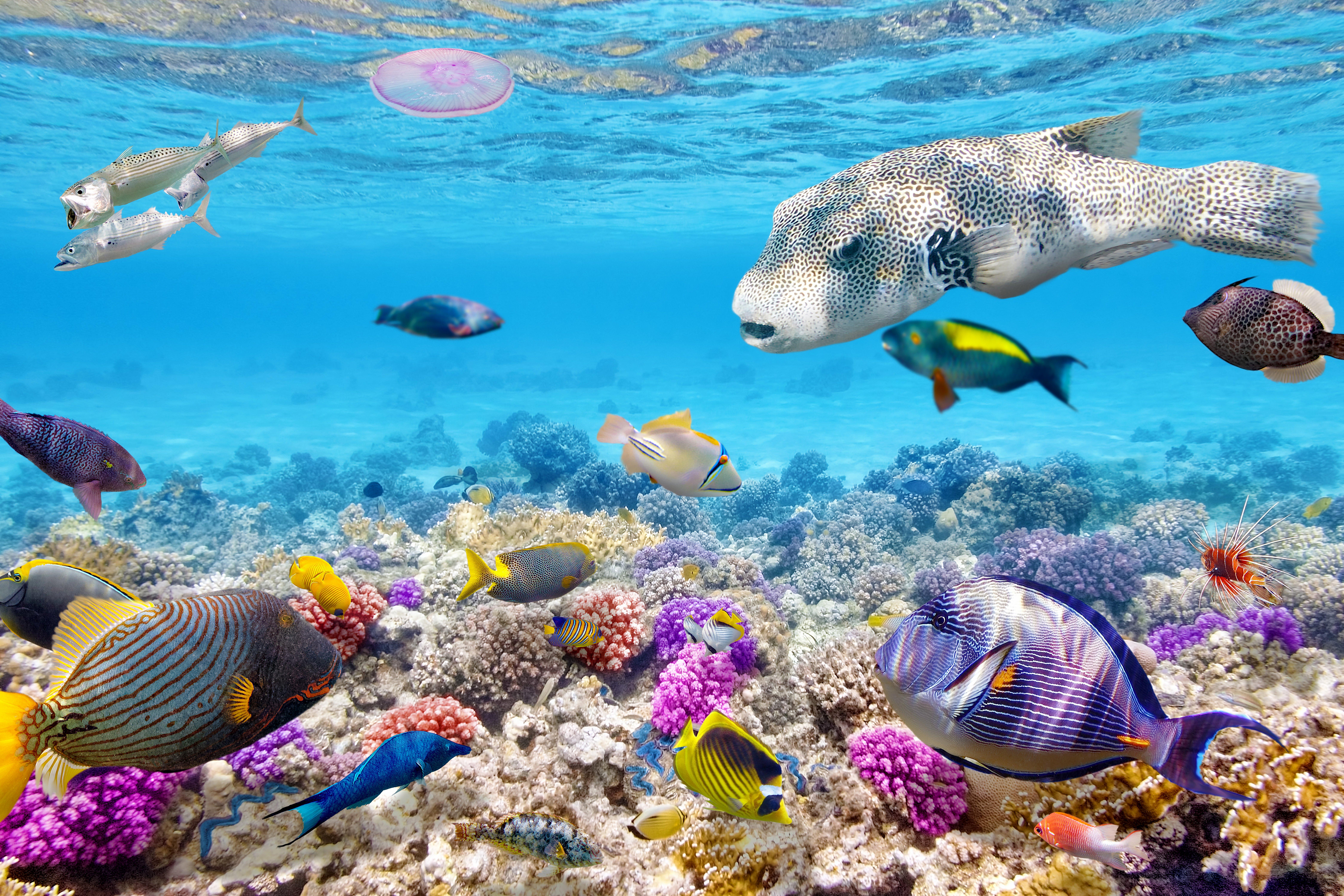 Fondos de pantalla Peces en el océano