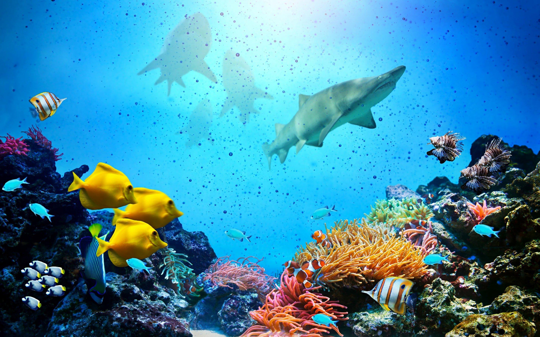 Fondos de pantalla Peces y tiburones en el océano