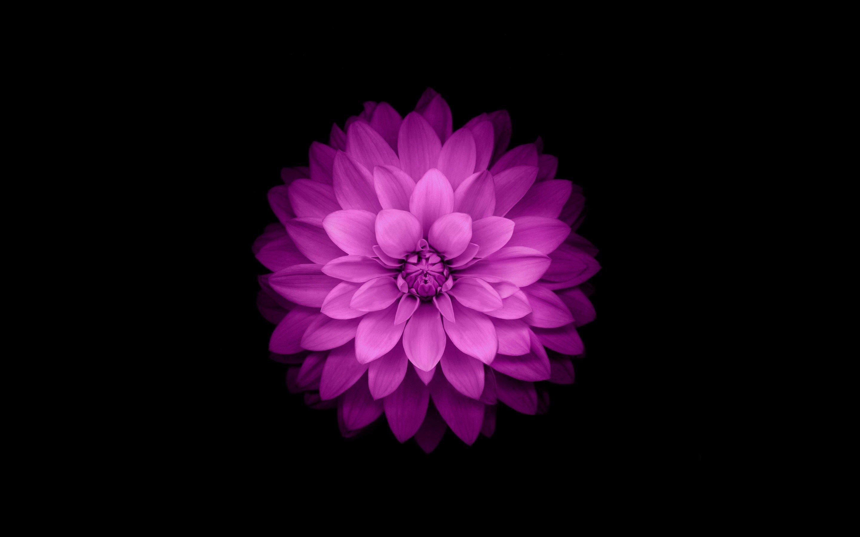 Fondos de pantalla Pétalos de flor