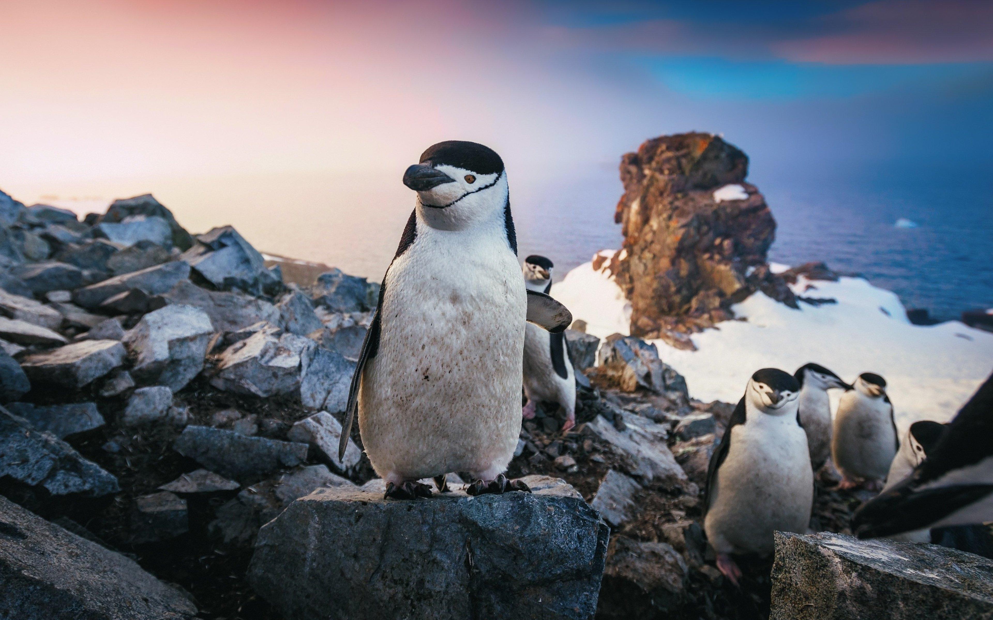 Fondos de pantalla Pingüinos al atardecer