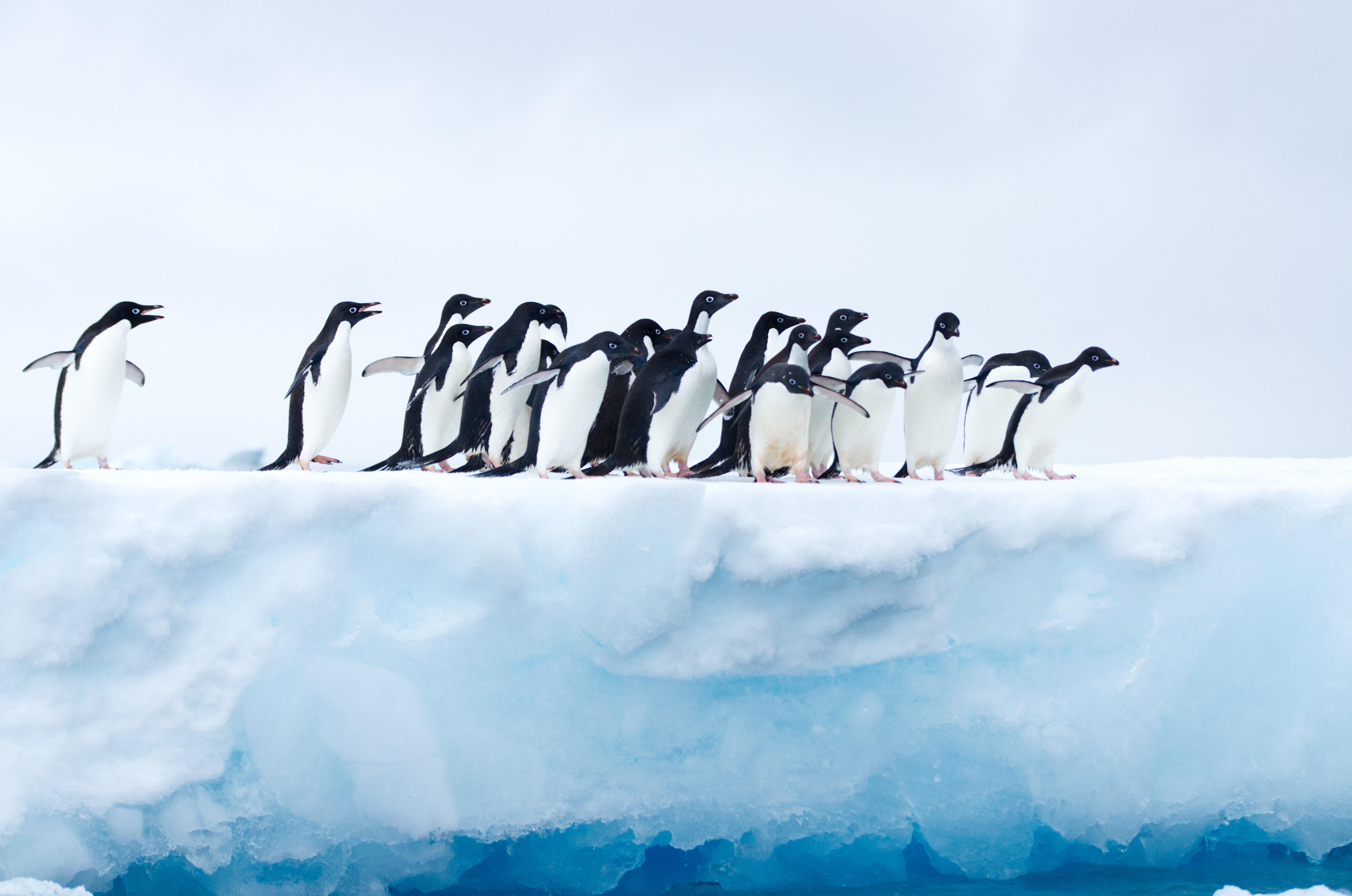 Fondos de pantalla Pingüinos en la Antartica