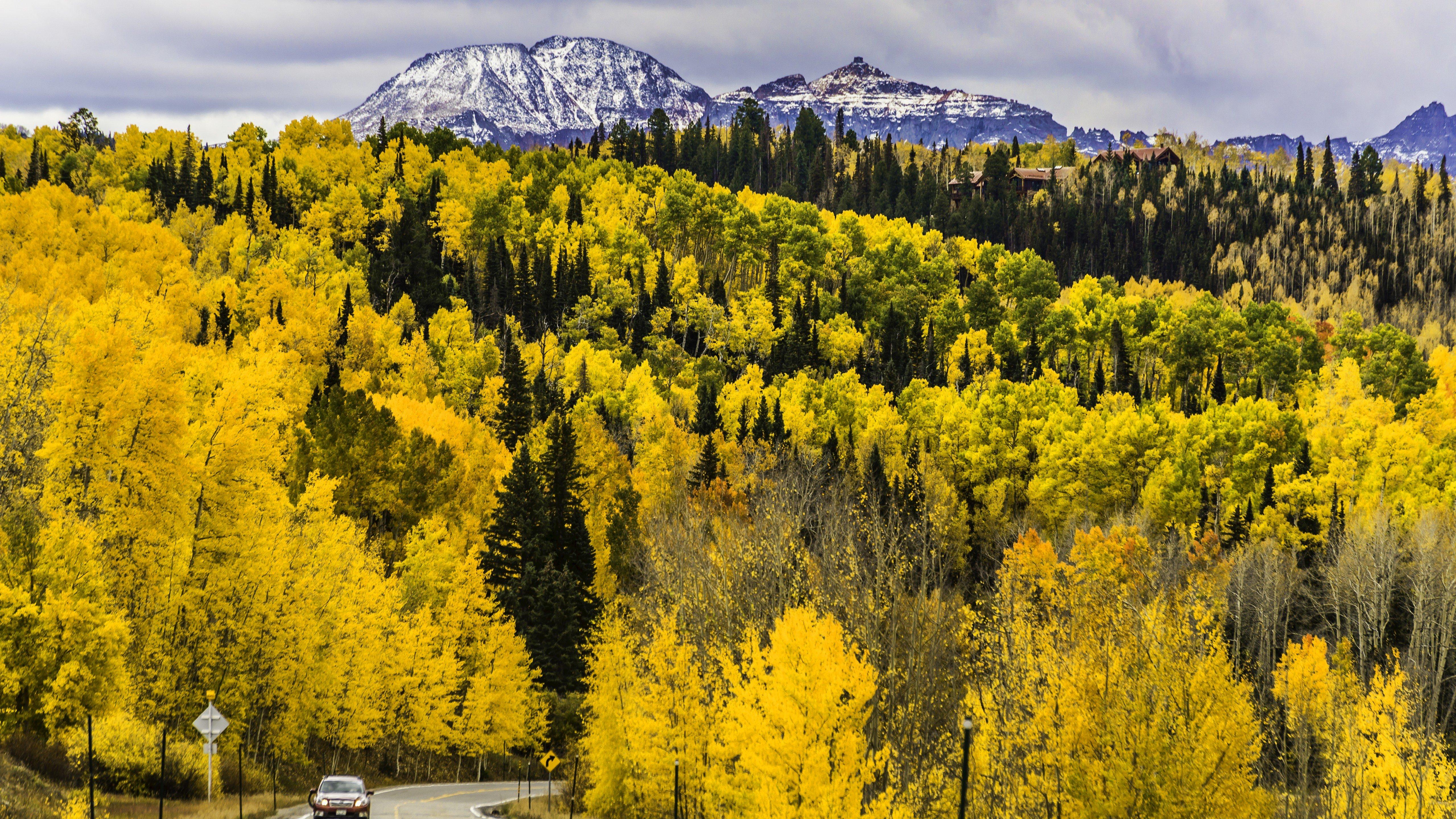 Fondos de pantalla Pinos en bosque durante otoño en Colorado