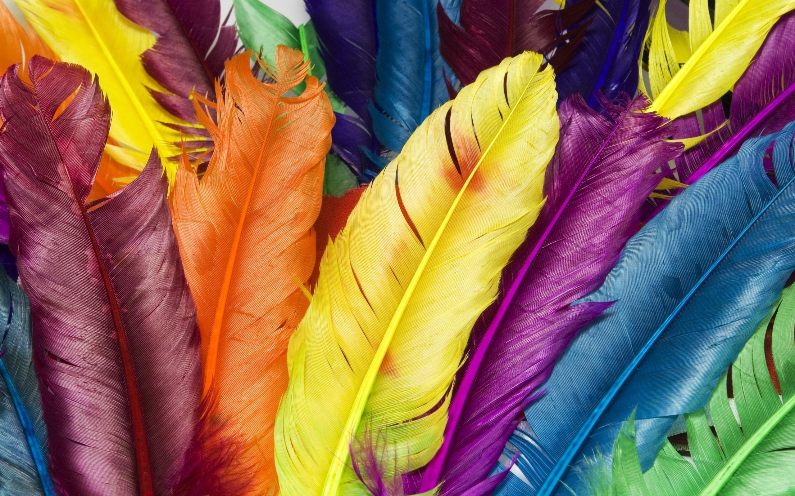 Wallpaper Colourful feathers