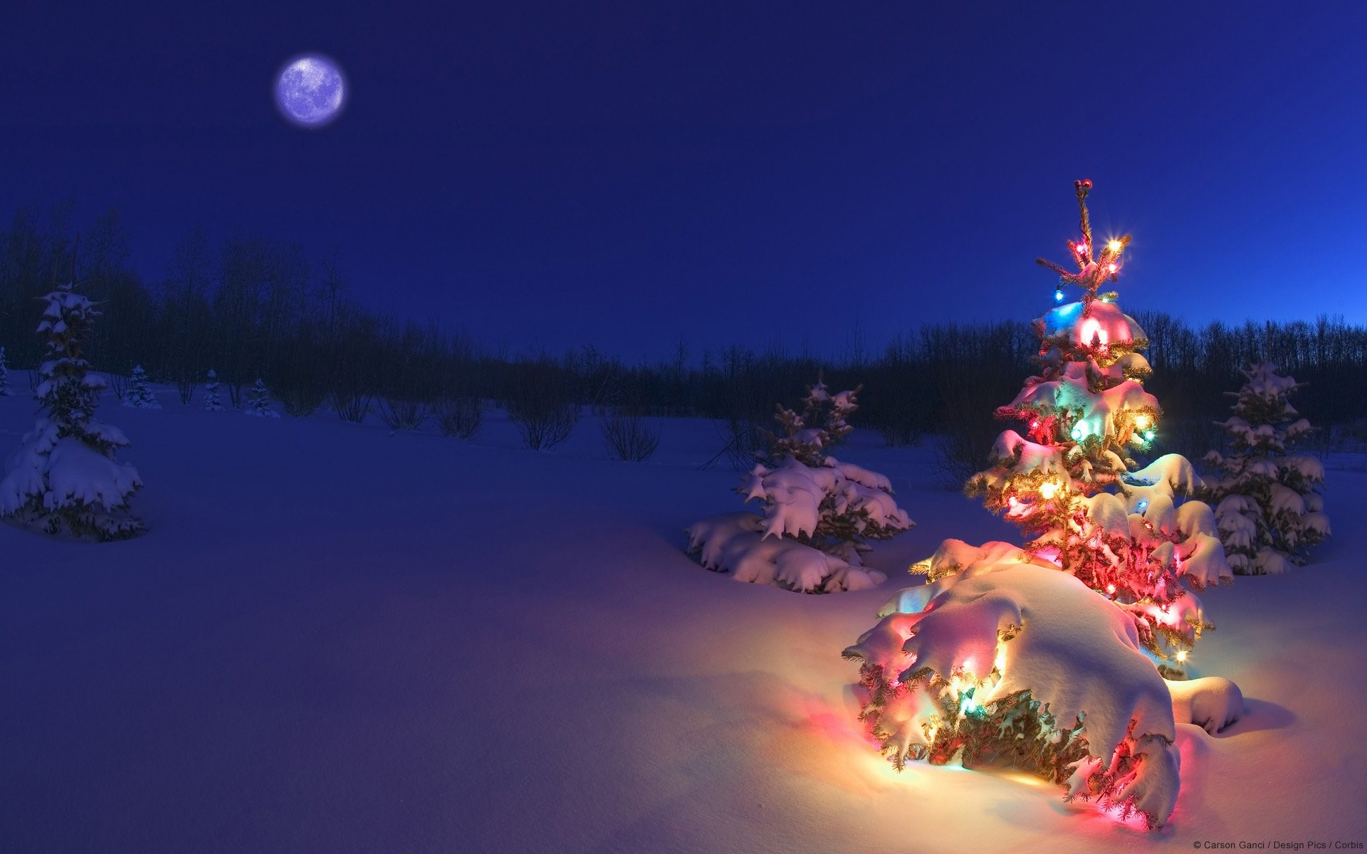 Wallpaper Christmas tree with lights at the North Pole