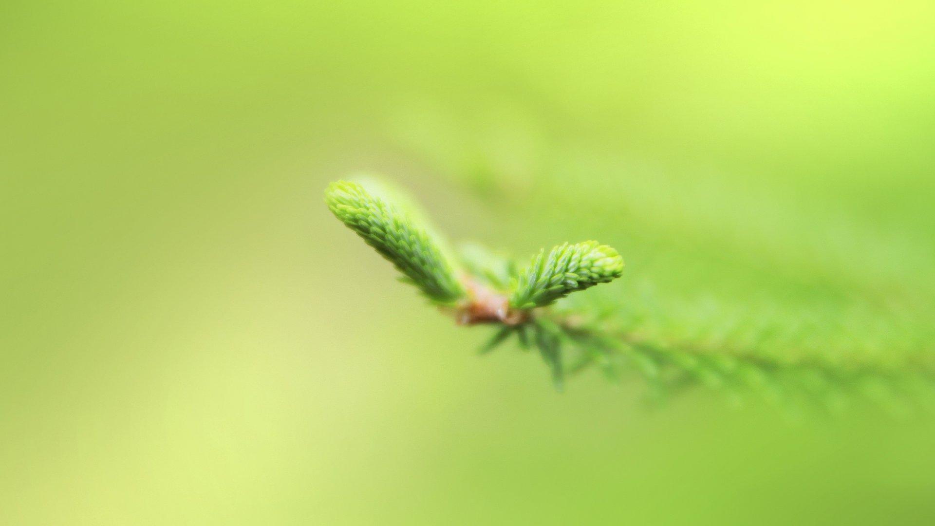 зелень ветка макро без смс