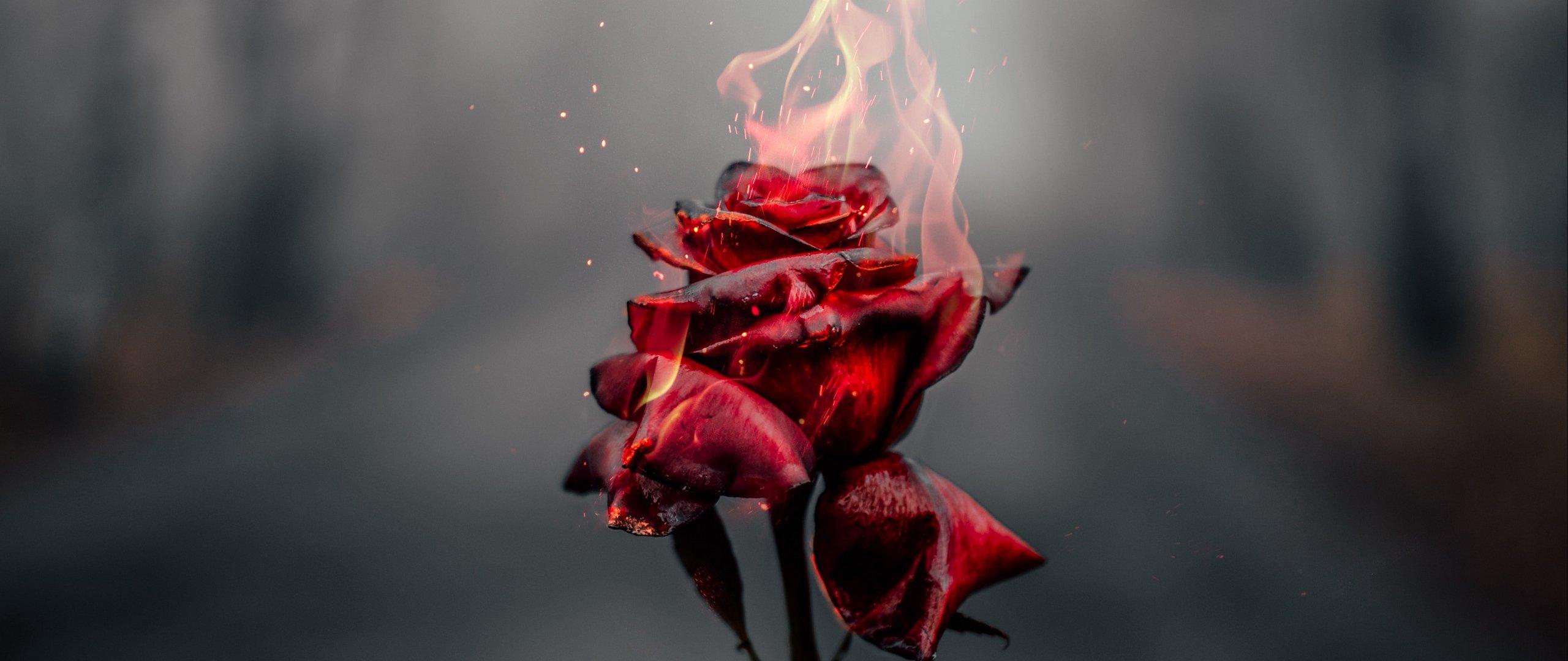Wallpaper Rose in fire
