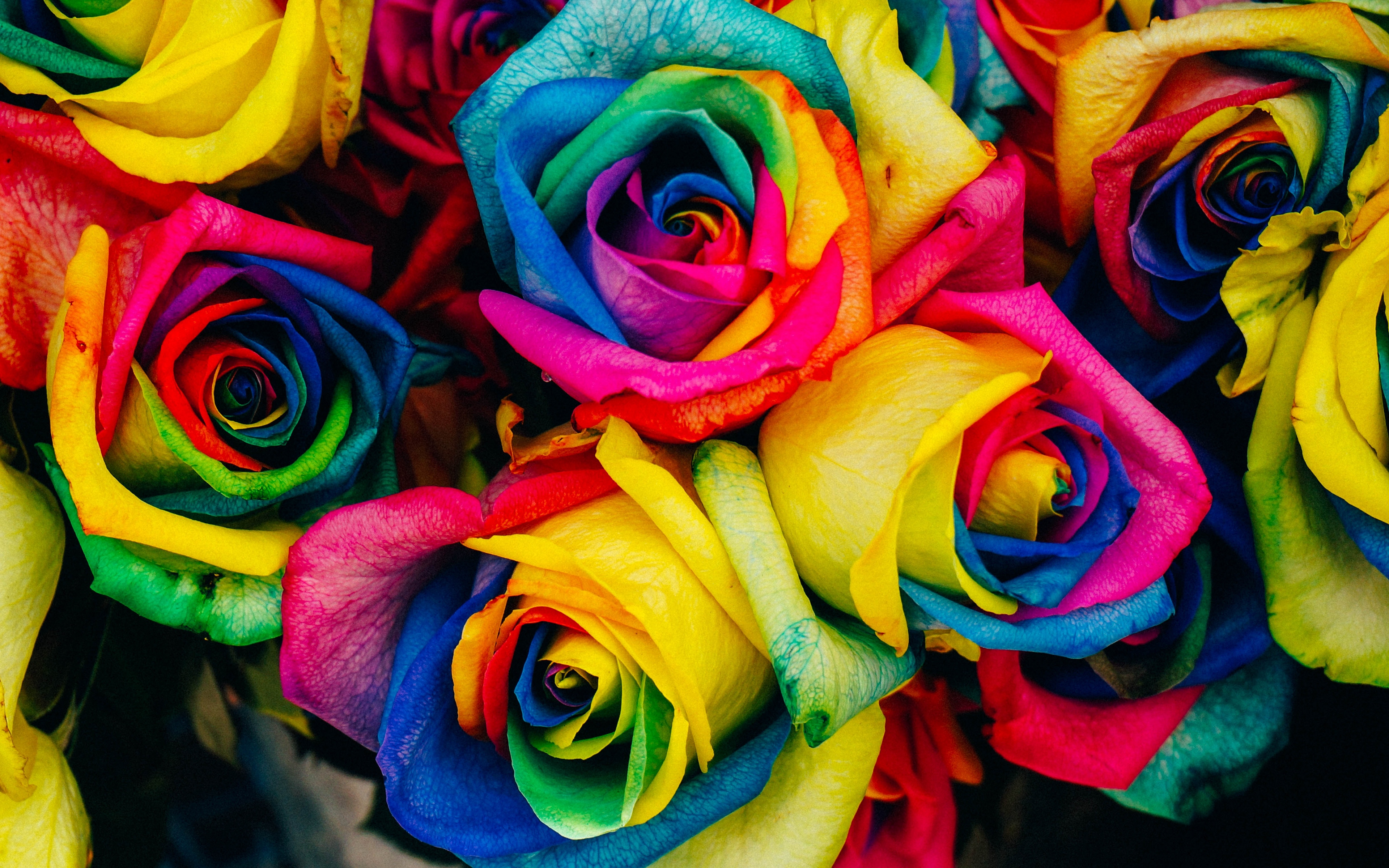 Colorful Roses Wallpaper 4k Ultra Hd Id4046