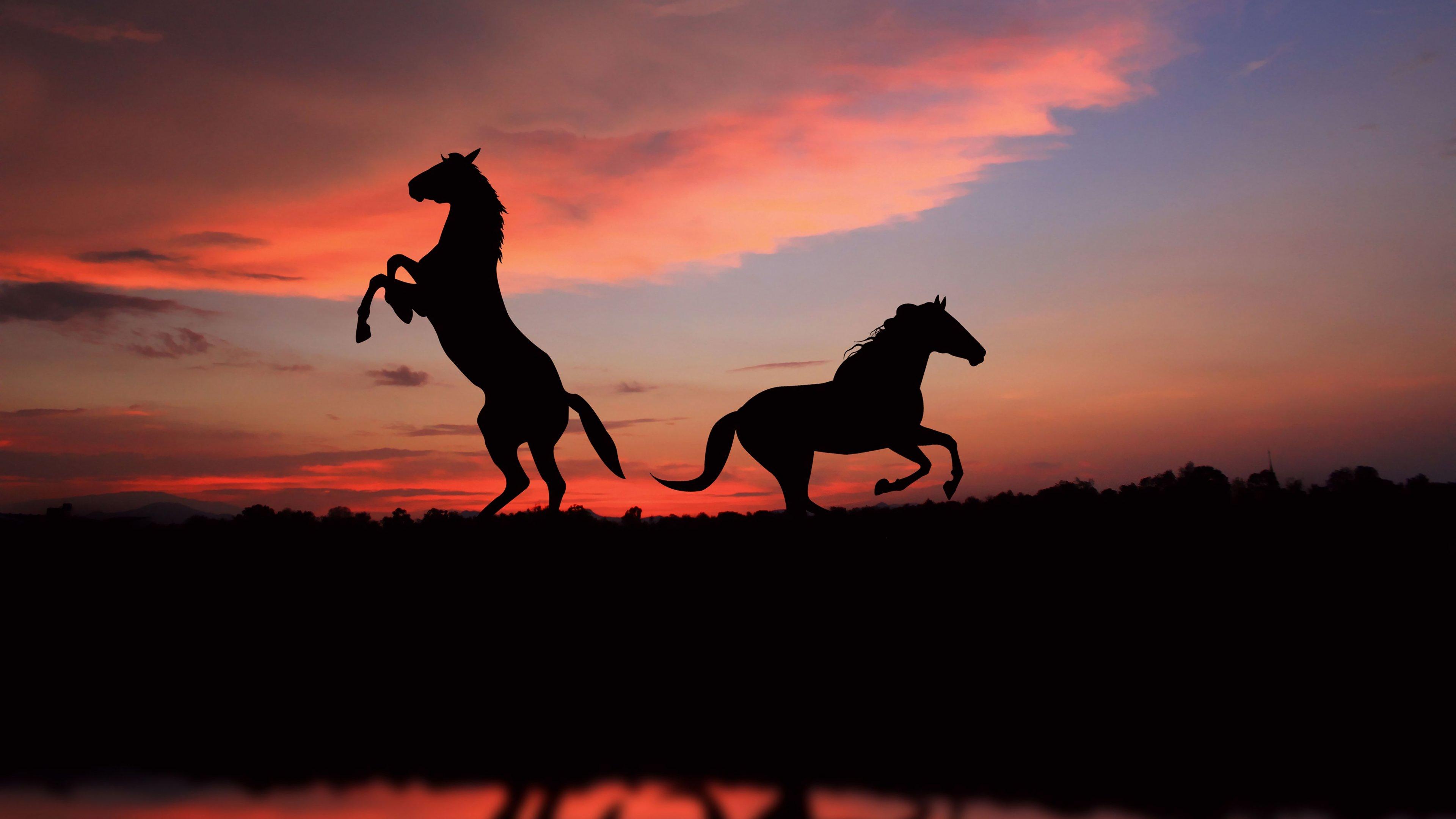 Fondos de pantalla Siluetas de caballos al atardecer