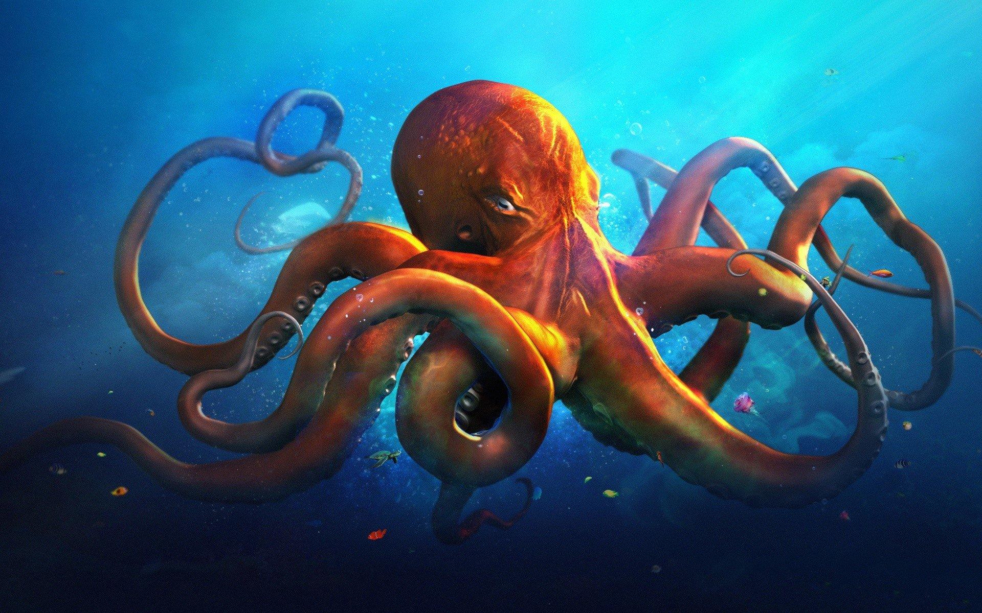 Fondos de pantalla Slouching octopus