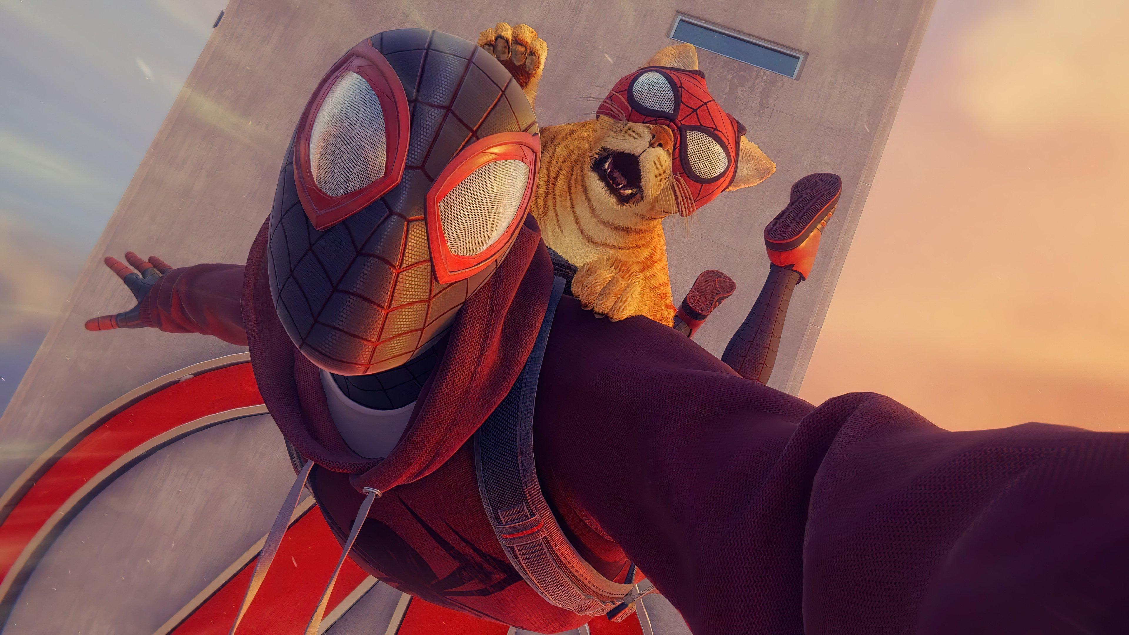 Wallpaper Spiderman and Spidercat