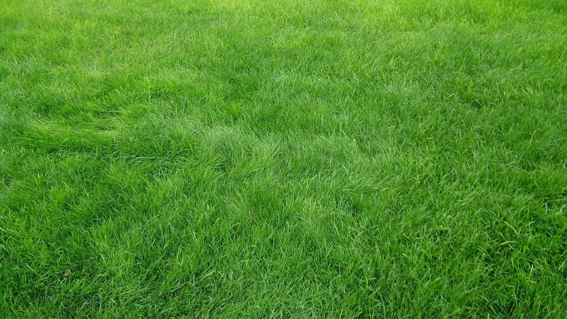 Wallpaper Grass texture