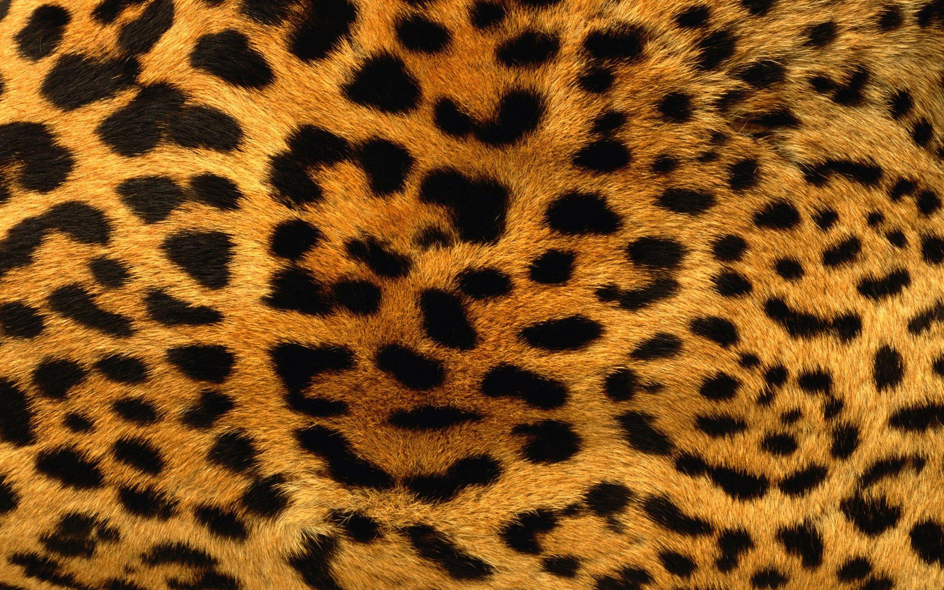 Fondos de pantalla Textura piel de leopardo