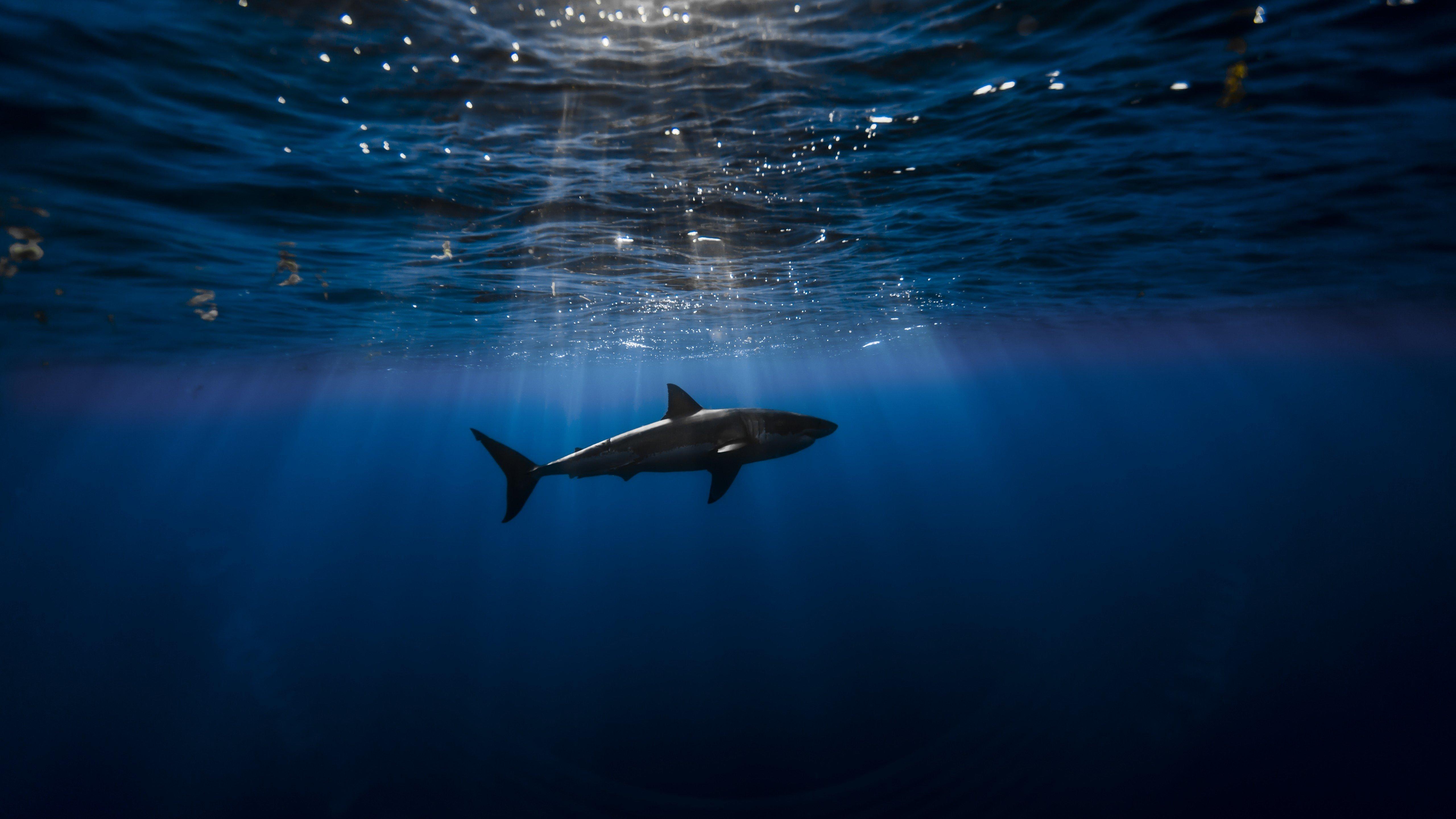 Fondos de pantalla Tiburón en el agua