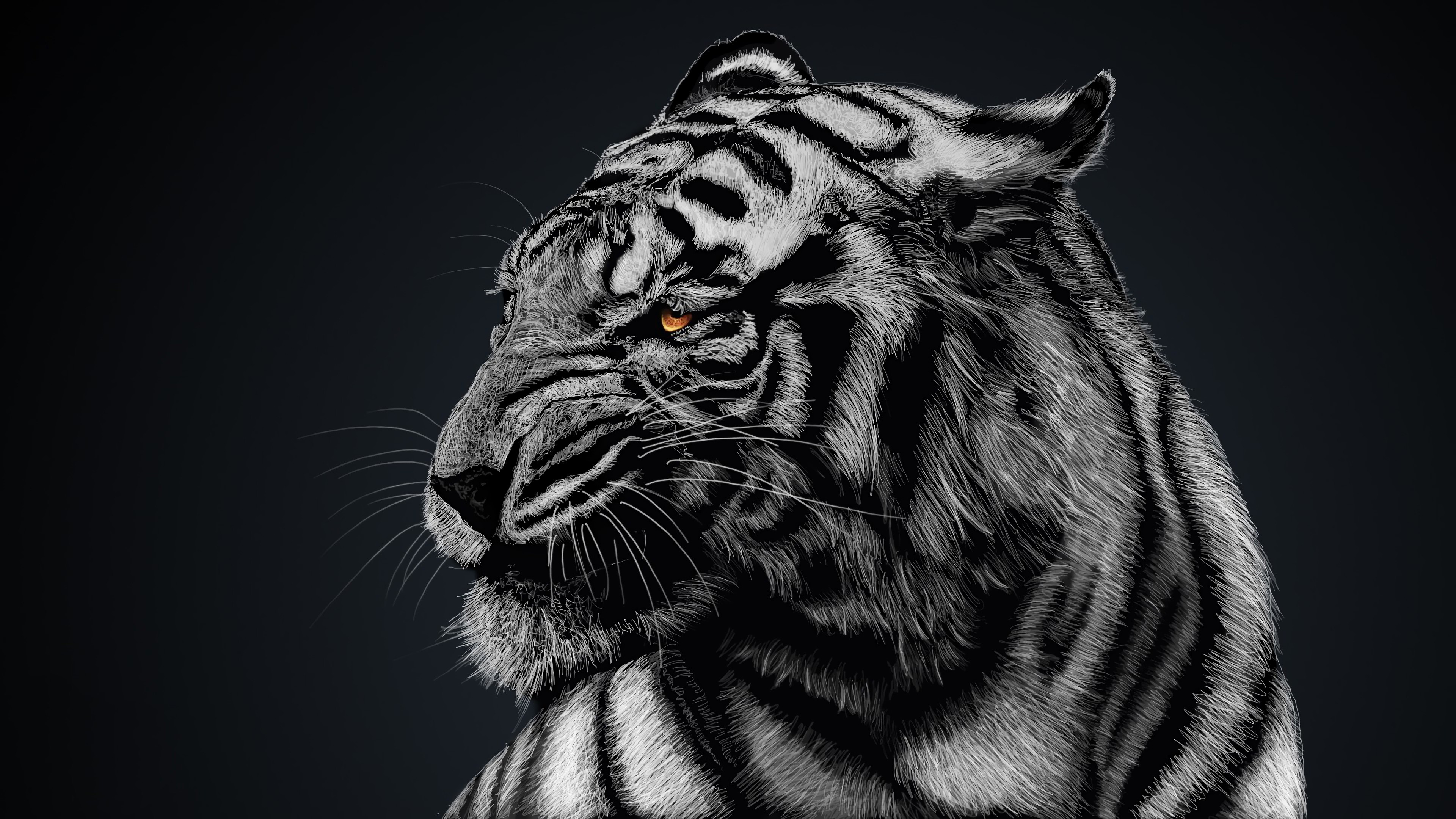 Wallpaper White Tiger