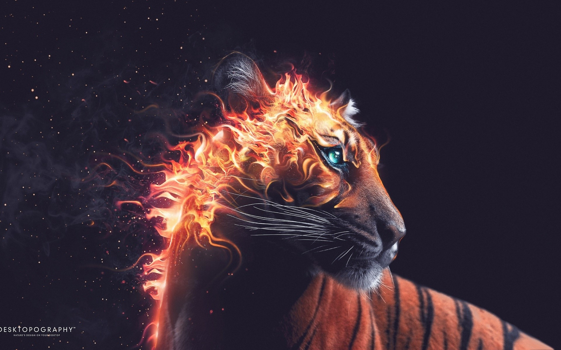 Wallpaper Fire Tiger
